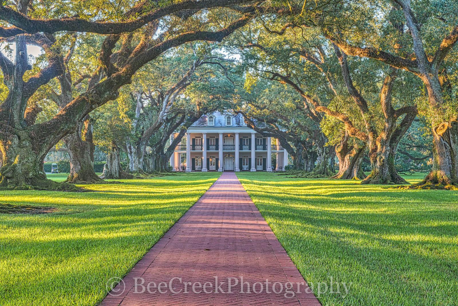 Louisiana, National Historic Landmark, Oak Alley, Sunrise, big house, branches, canopy, history, landmark, limbs, mansion, Mississippi, oak trees, plantation, sidewalk, slaves, sugar cane