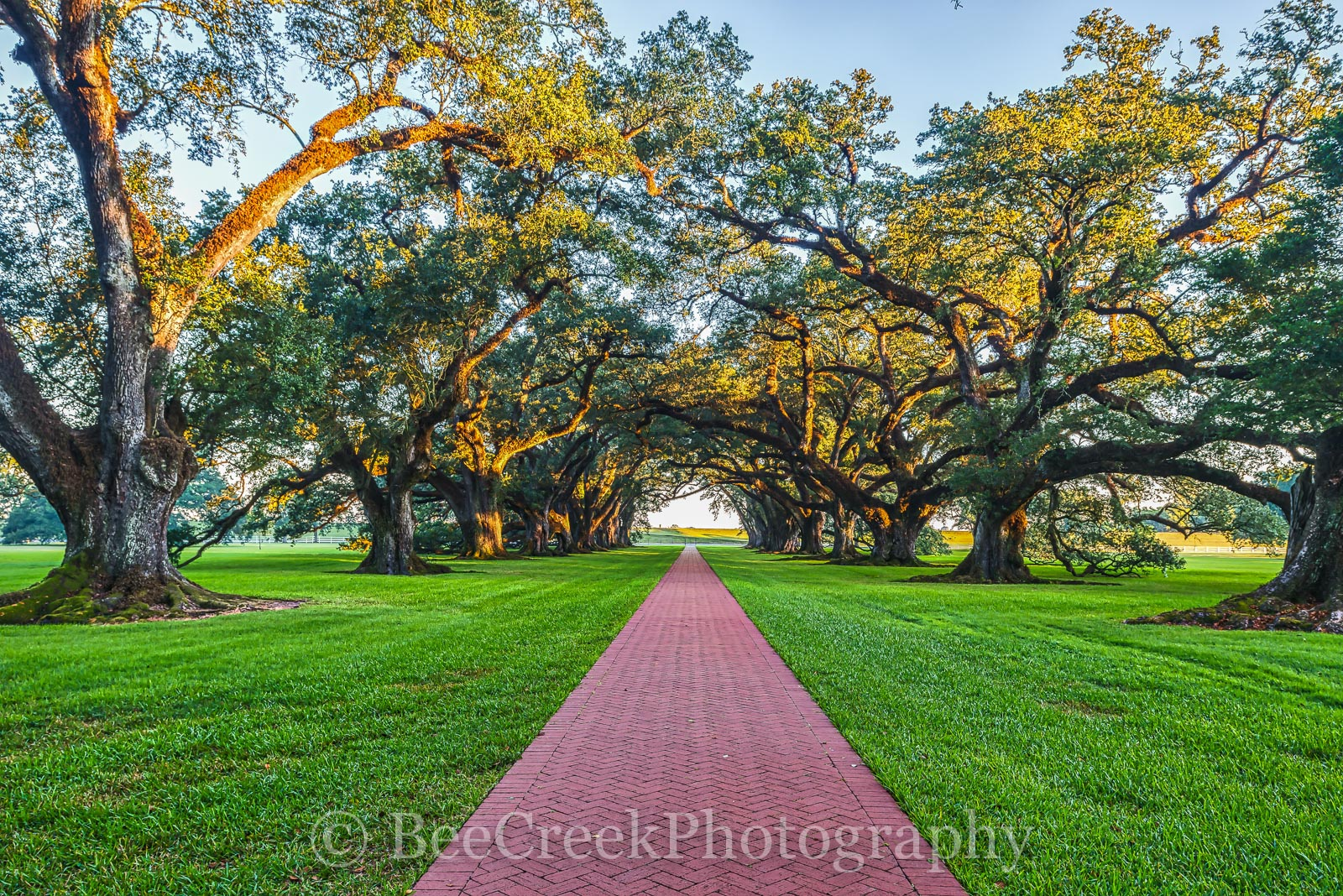 Lousiana, National Historic Landmark, Oak Alley, Sunrise, big house, branches, mansion, mississippi, oak trees, plantation, sidewalk, slaves, sugar cane, photo