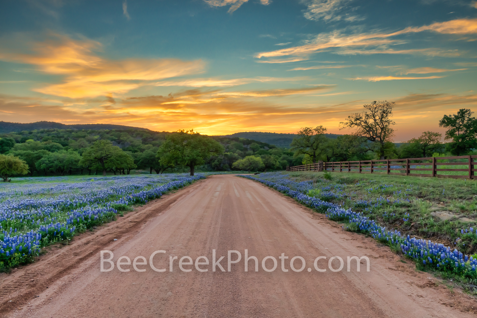 bluebonnets, Texas bluebonnets, texas hill country, texas wildflowers, sunset, dirt road, texas, scenery, texas landscape, hill country, hill country landscape, spring, bluebonnet road, wildflowers,  , photo