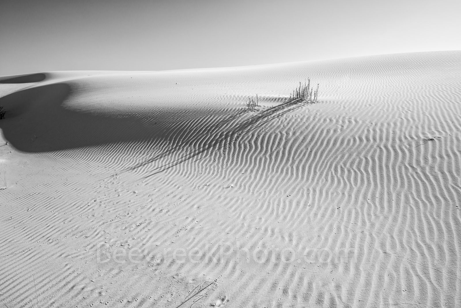white sands dunes, small tracks, shadows, sand, white sands, sand dunes, desert southwest, desert landscape, new mexico, gypsum, patterns, waves of patterns, images of white sands, photos of wihite sa, photo