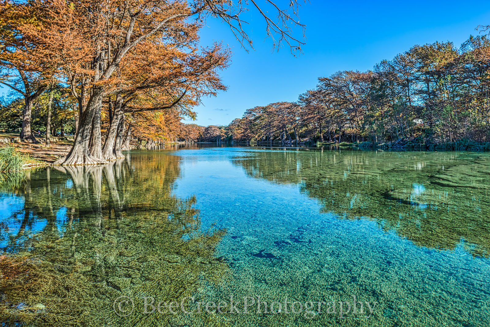 America, American, Frio River, Garner State Park, blue green waters, blue water, colorful, cypress trees, emerald, fall, fall colors, fall cypress trees, fall trees, images of Texas, landscape, , photo