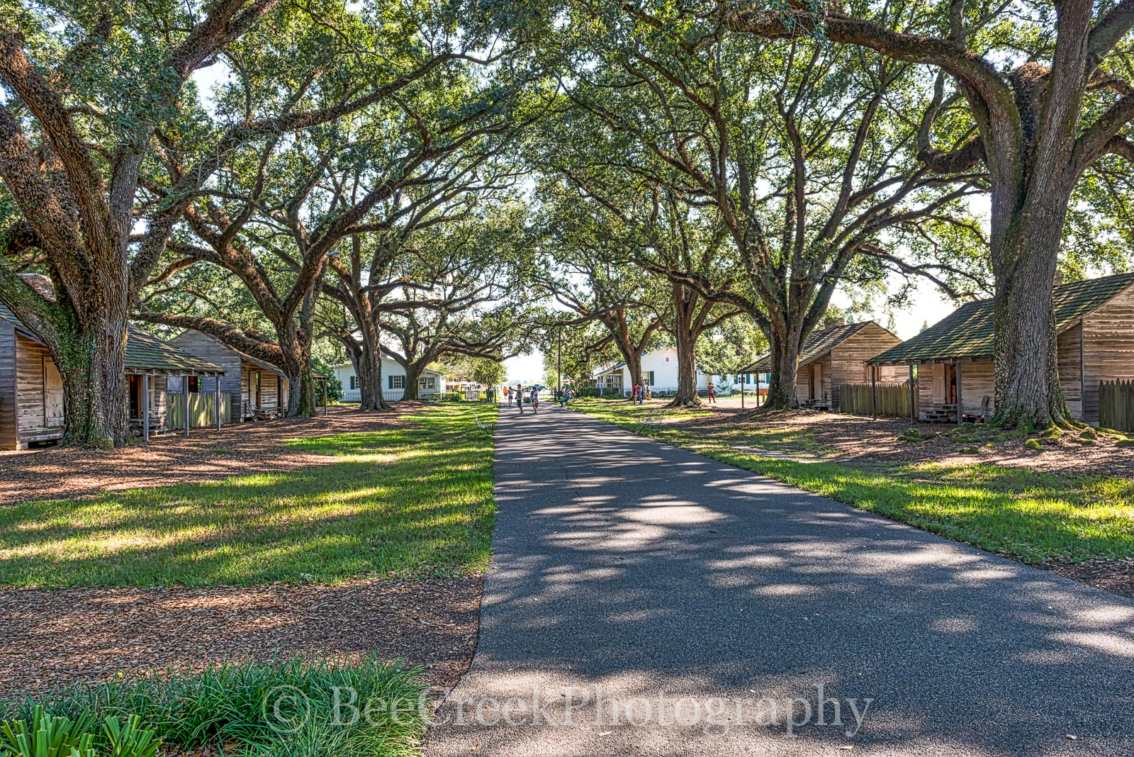 Lousiania, National Historic Landmark, Oak Alley, homes, mansion, mississippi, plantation, slaves, sugar cane, photo