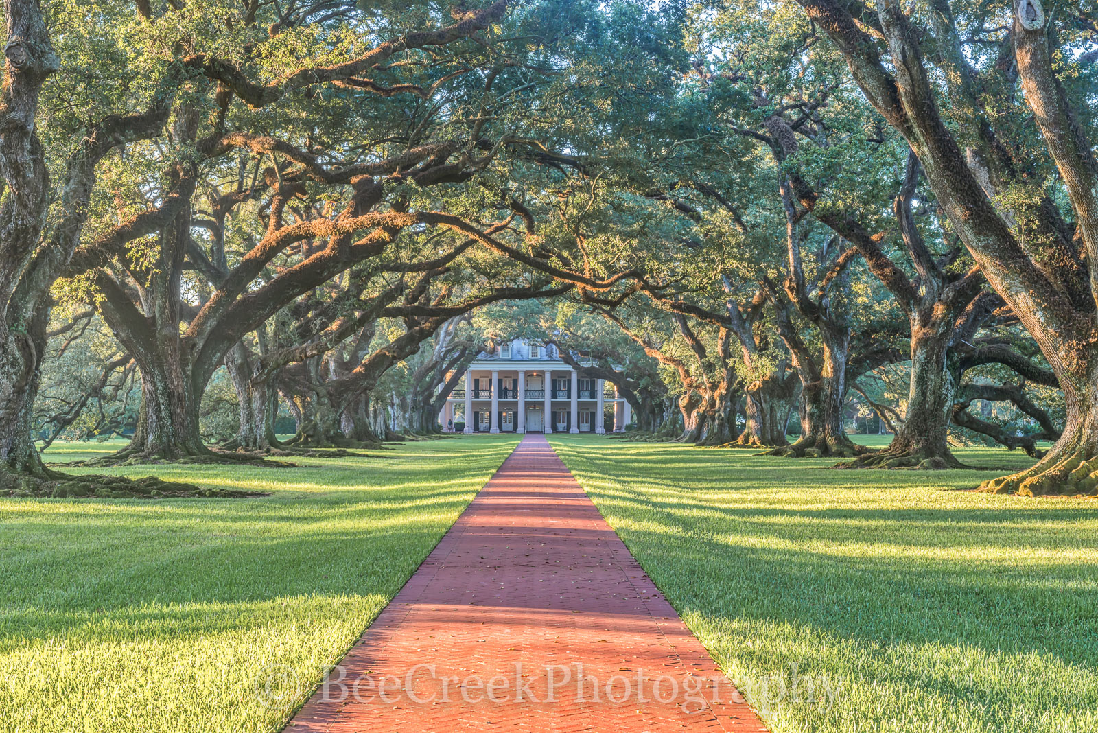 Lousiana, National Historic Landmark, Oak Alley, Sunrise, big house, canopy, landscape, landscapes, mansion, mississippi, oak trees, plantation, sidewalk, slaves, sugar cane, photo