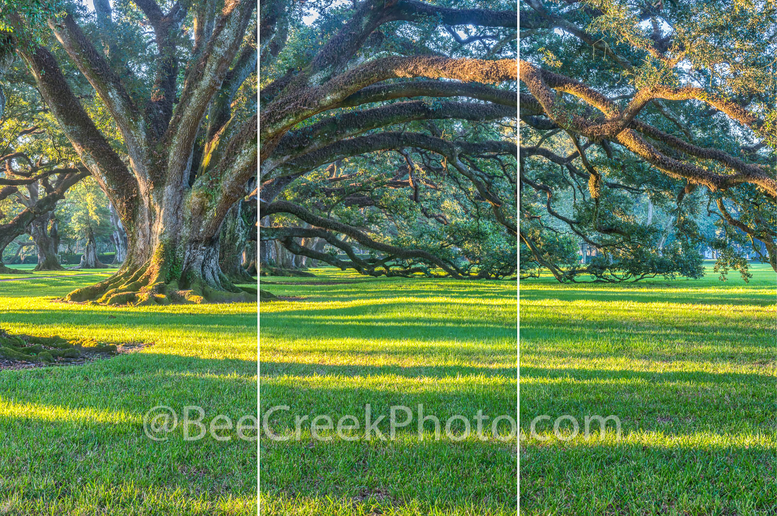 Live Oak, trees, oak trees, plantation, landscape, sunrise, trptych, three panel split image,
