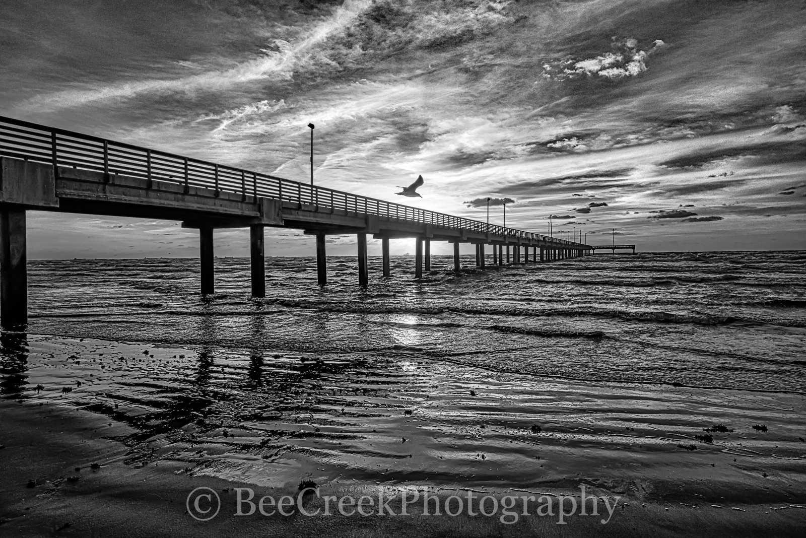Coastal Pier, bird, black and white, bw, clouds, gulf coast, sand, sea gull, sun sunrise, surf, photo