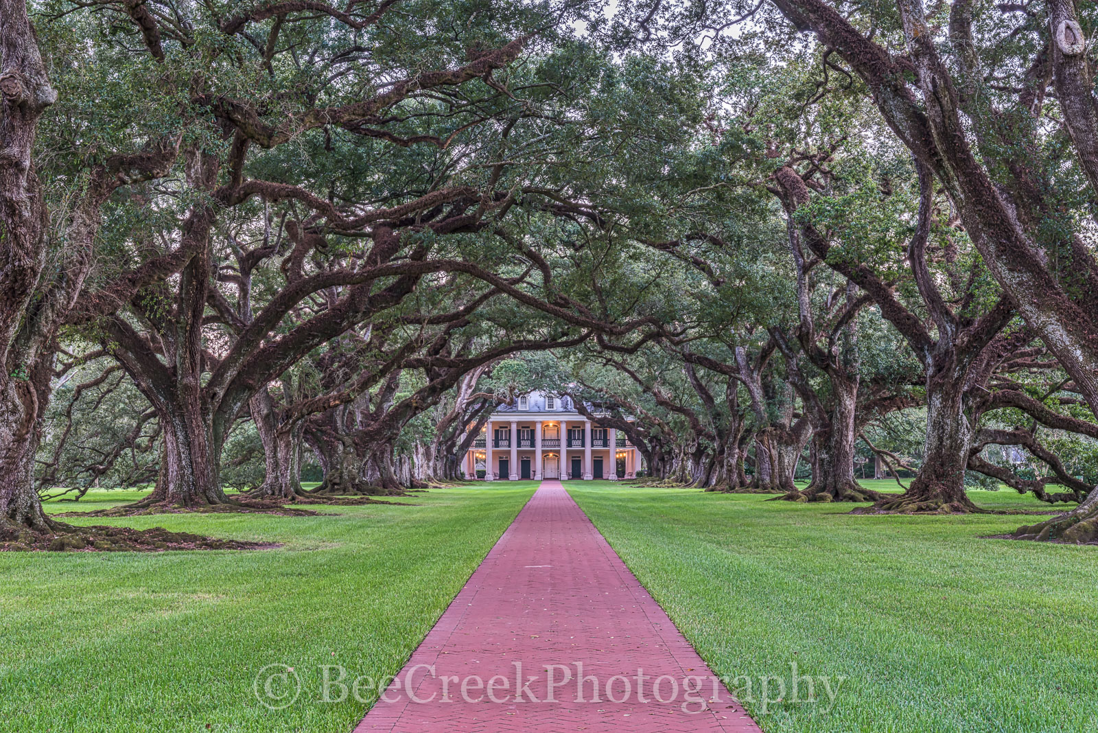 Lousiana, Oak Alley, Sunrise, big house, branches, dusk, mansion, oak trees, plantation, sidewalk, slaves, sugar cane, photo