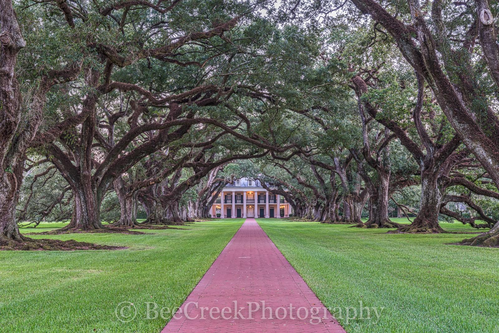 Lousiana, Oak Alley, Sunrise, big house, branches, dusk, mansion, oak trees, plantation, sidewalk, slaves, sugar cane, photo