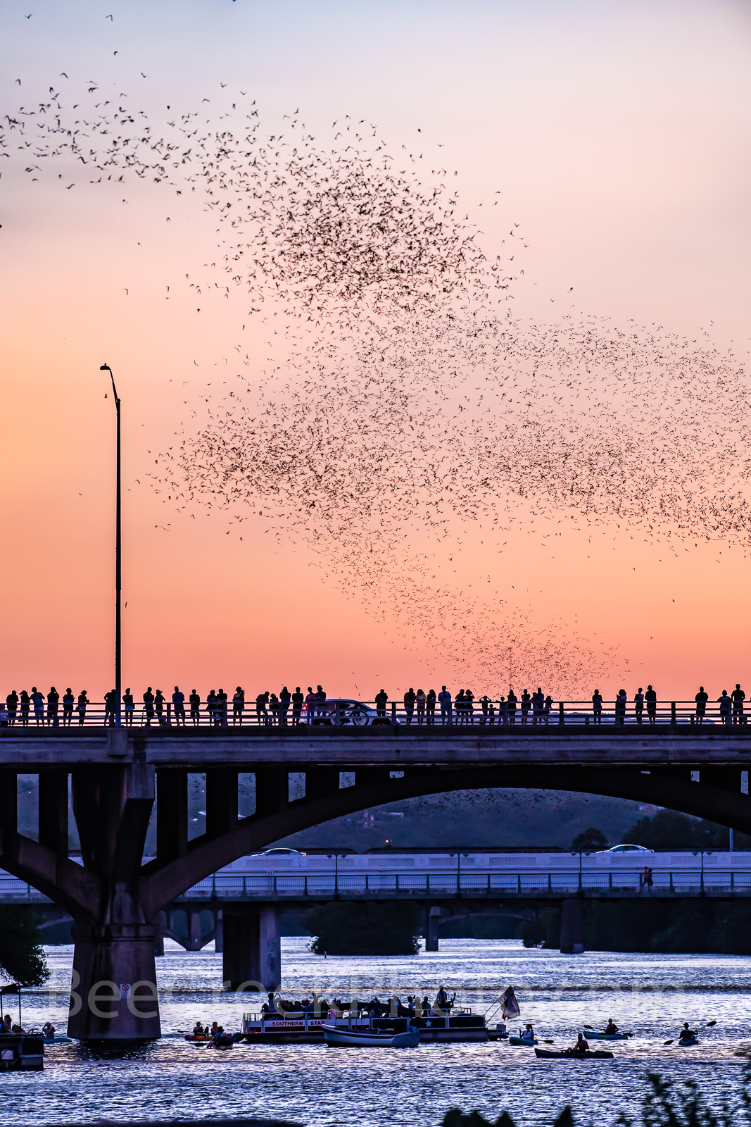 Austin Bats Vertical, Austin, Congress, Bats, bridge, downtown, Ann Richard Congress Bridge, dusk, people, crowds, Austin bat watch, downtown, boat, tour boats,, photo