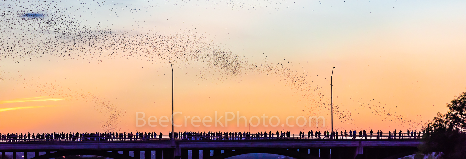 Austin Congress Bats Panorama, Austin, Congress, Bats, baby bats, mexican free tail bats, bridge, downtown, Ann Richard Congress Bridge, dusk, people, crowds, , sky, Line, Radisom, hotels, Hyatt, pano, photo