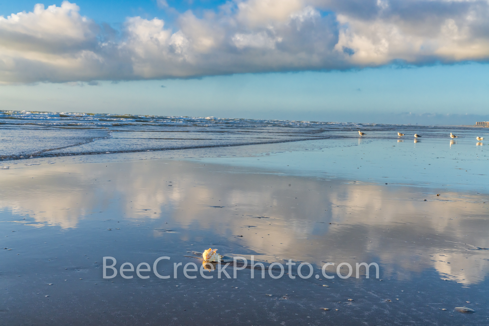 texas, coast, coastal, texas coast, seashore, beach, beaches, sea shell, clouds, reflections, shell, surf, tide, blue sky, blue, puffy white clouds, port aransas, port a, corpus christi, bird, dolphin, photo