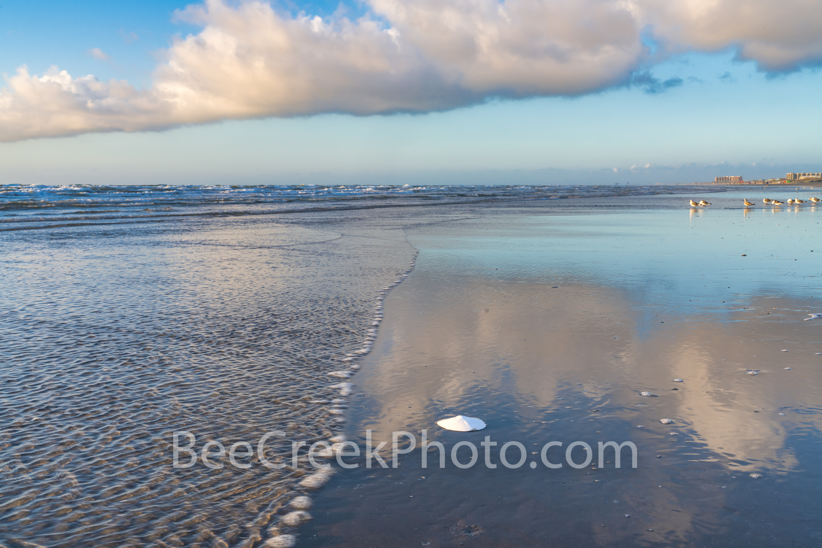 Beach Sand Dollar Reflection - This was right after sunrise looking down the beach as the clouds in the sky reflected nicely...