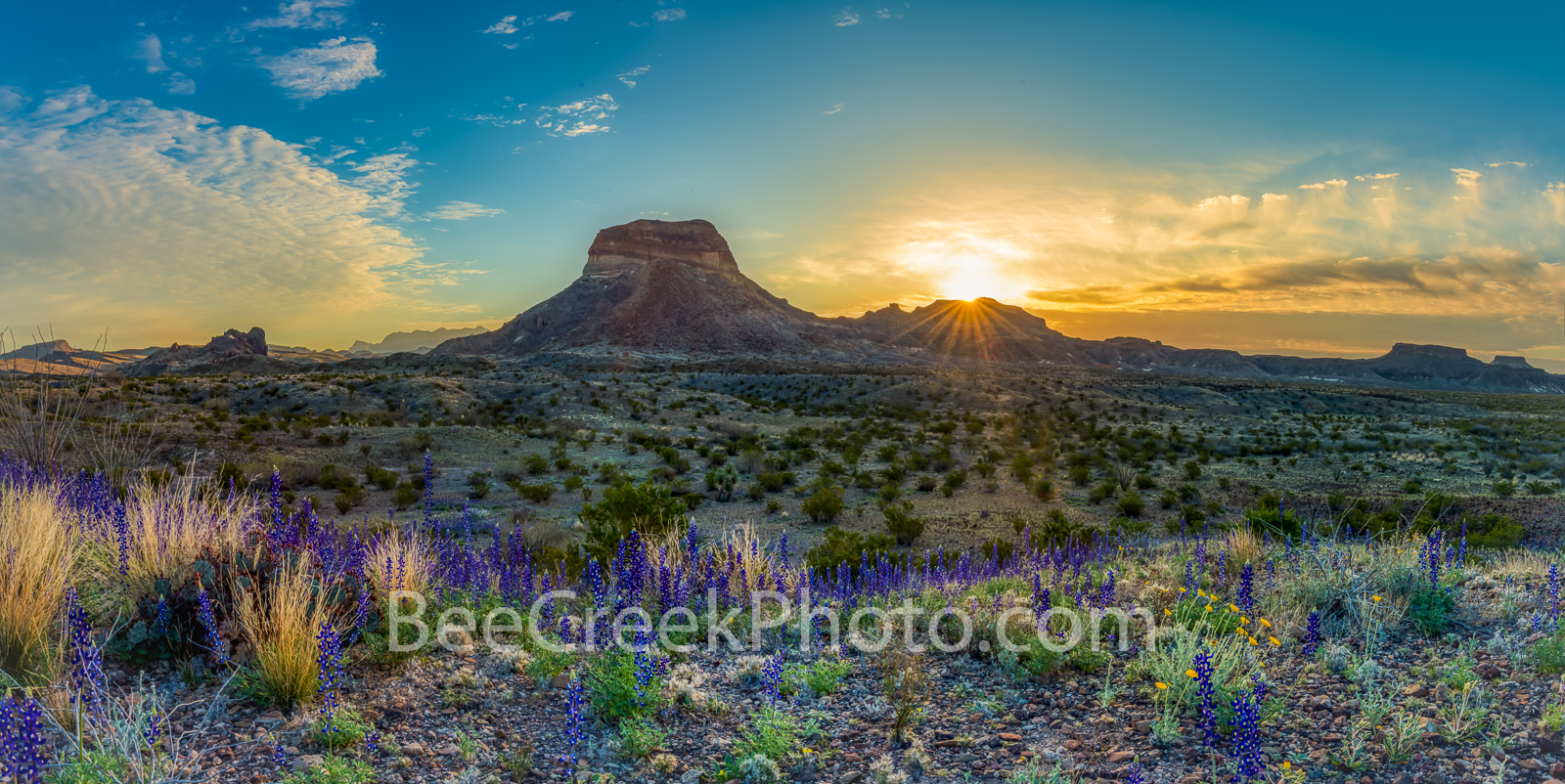 Bluebonnets, blue bonnets, big bend bluebonnets, wildflowers, sunrise, images of bluebonnet, texas wildflowers, texas bluebonnets, Big Bend National Park, Big Bend, landmark, Cerro Castellan, desert, , photo