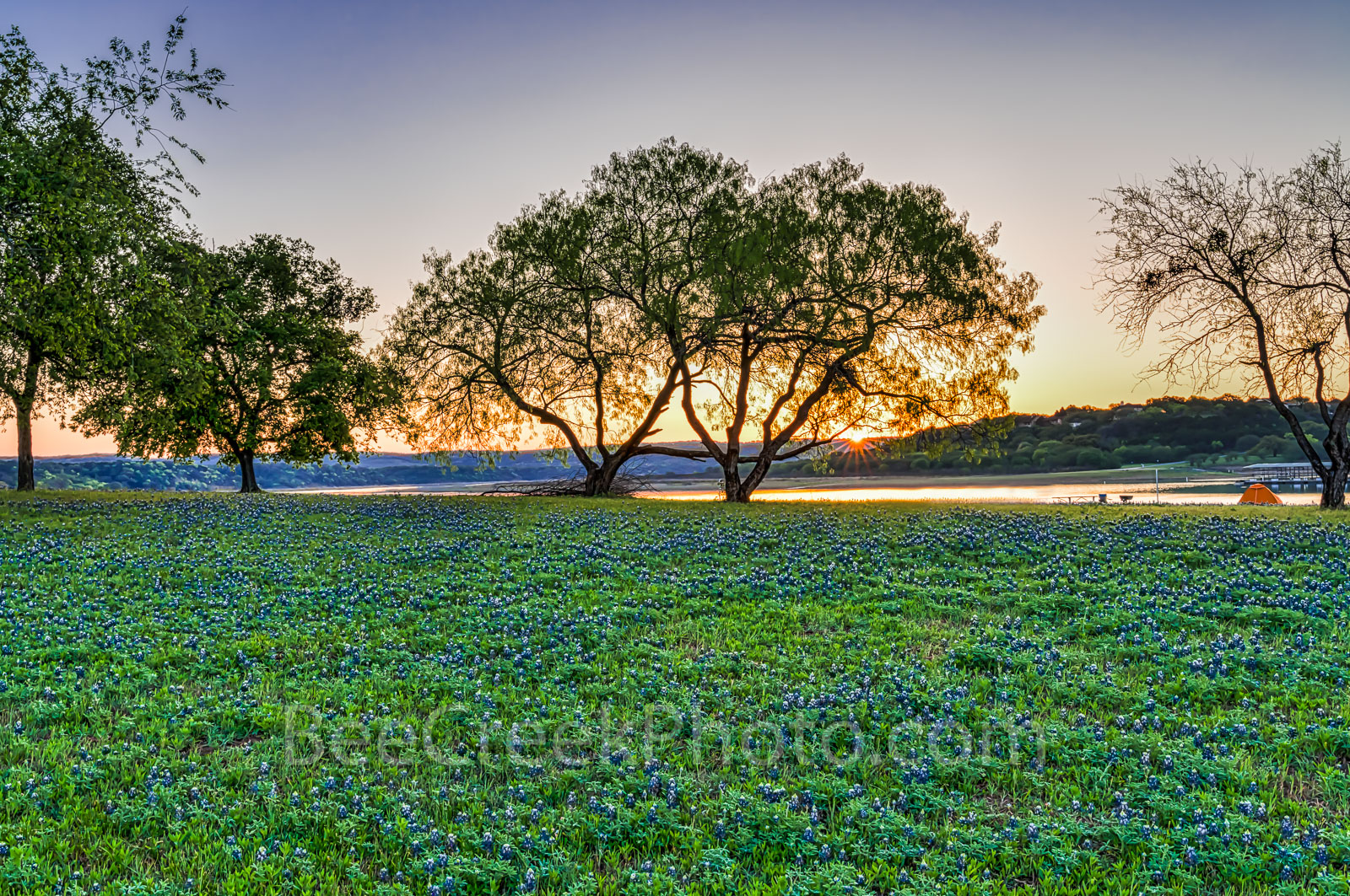 Bluebonnets, springtime, sunrise, Texas hill country, sun rays, field of bluebonnets, wildflower, water, river, tents, travel,lifestyle, Lady Bird, Highway Beautification Act,