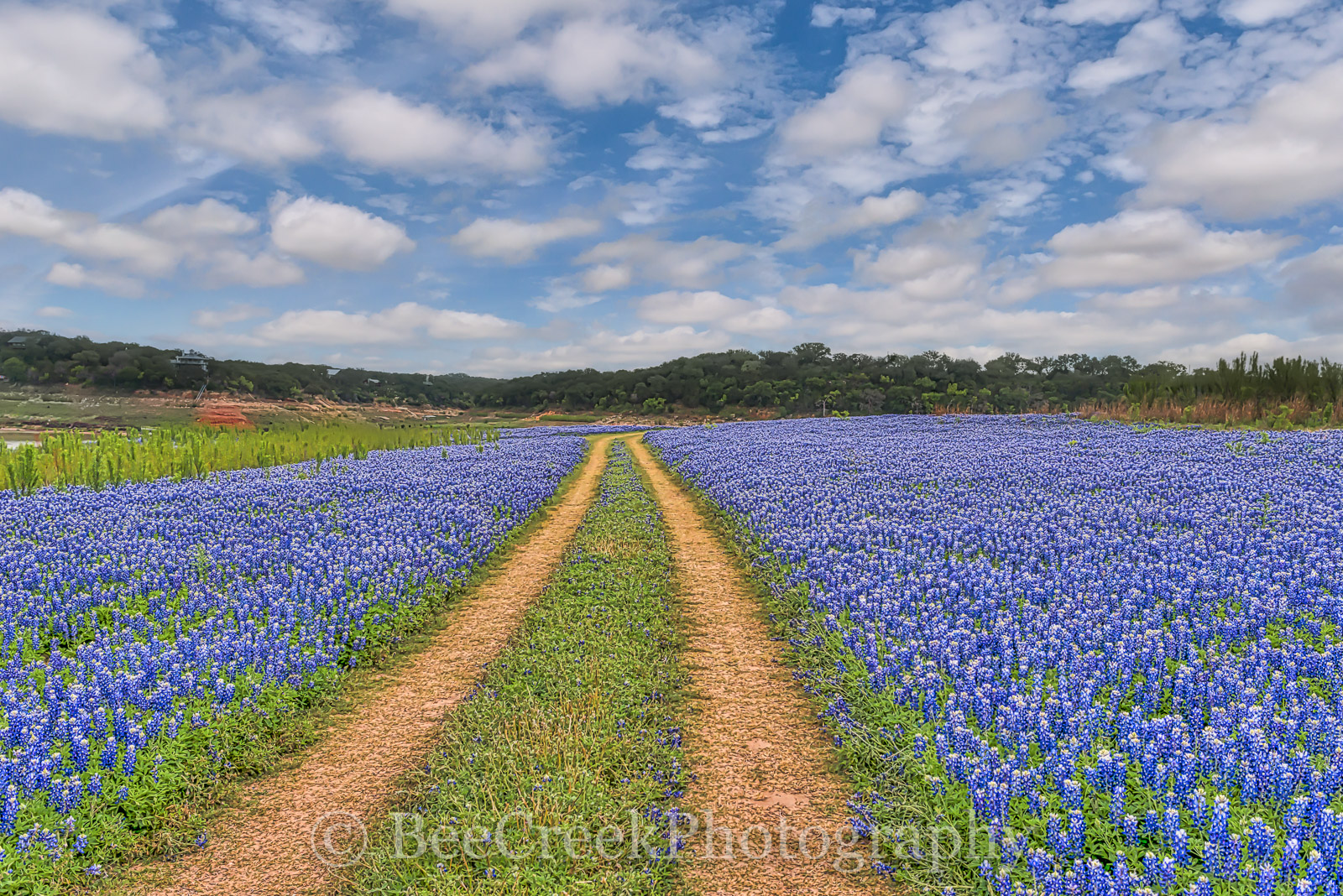 texas bluebonnets, bluebonnets, bluebonnet field, blue blonnets, images of blue bonnets, bluebonnets along the lake,  images of texas, photos from texas, road of bluebonnets, texas bluebonnet landscap