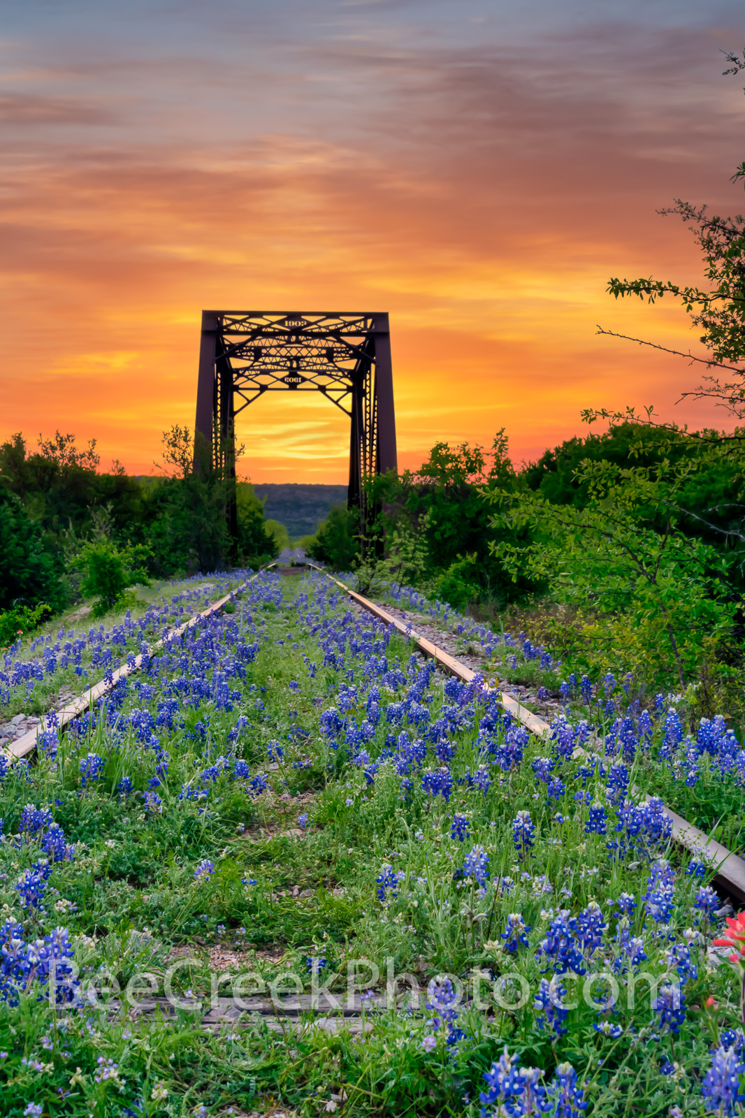 Bluebonnet at Railroad Tracks Sunrise Vertical  - We have come to this old abandoned rail road track in the past years for some...