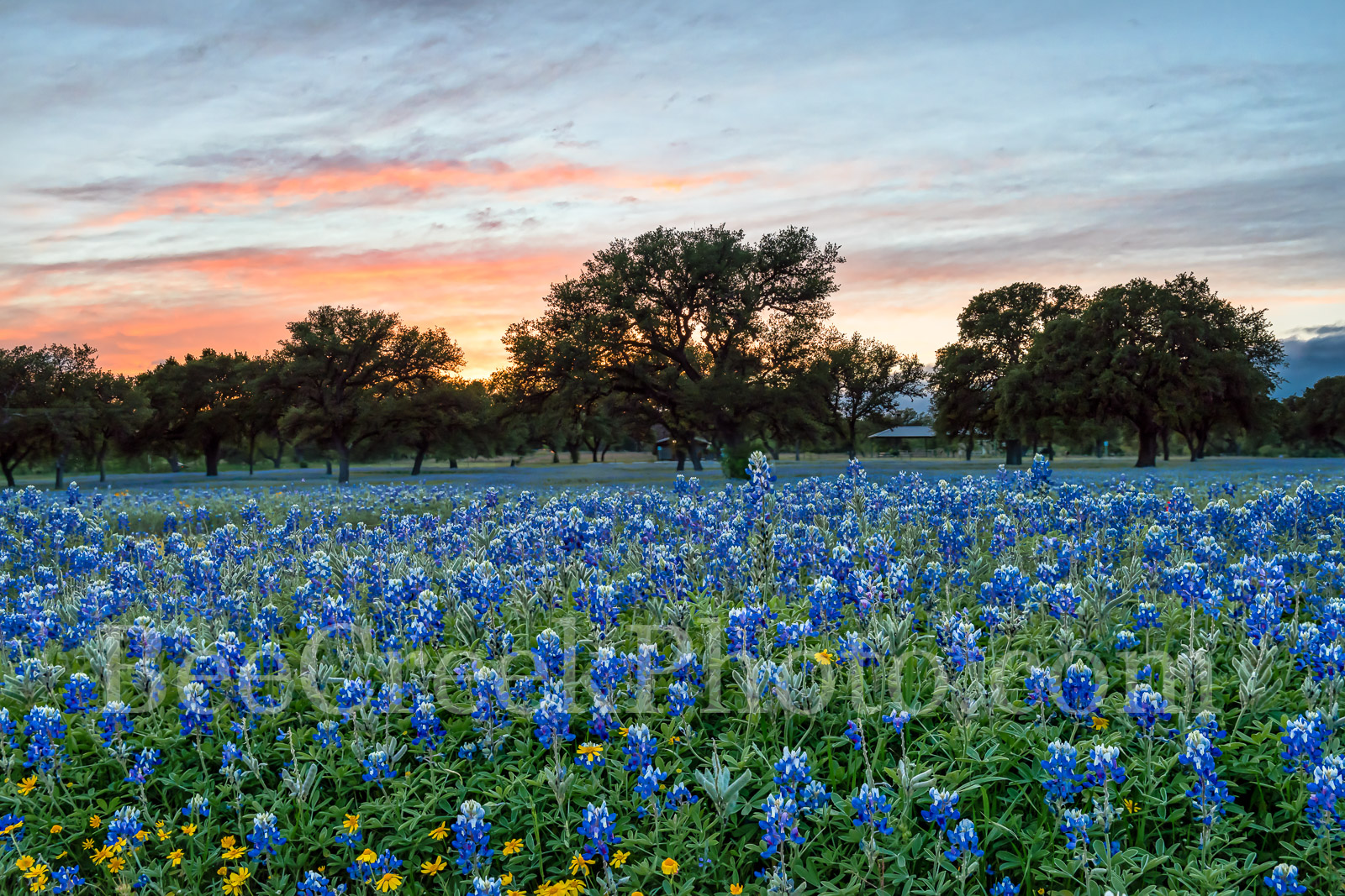 bluebonnets, wildflowers, texas hill country, sunset, dusk, colorful sky, landscape, rural, field of bluebonnets, images of texas, texas landscapes, Texas bluebonnets, texas wildflowers, photo