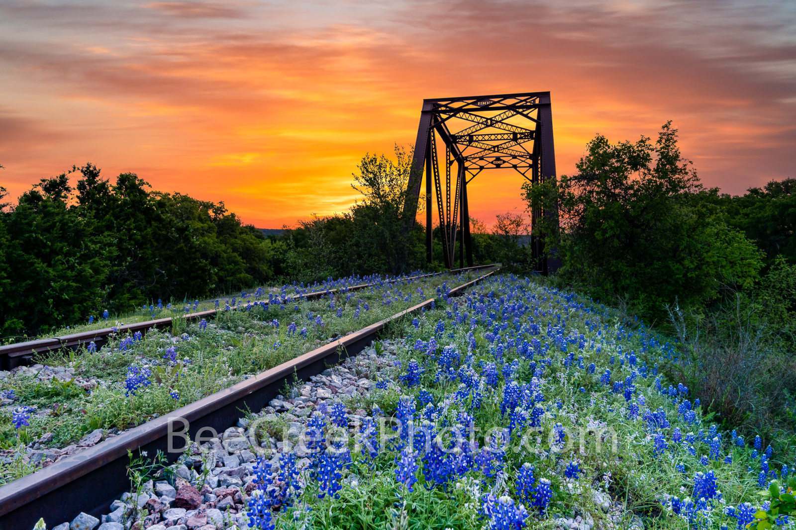 bluebonnet, texas bluebonnets, railroad tracks, tressel, sunrise, texas hill country, bluebonnets, orange sky, hill country, train tracks, sunset, west tex, bluebonnet at railroad track