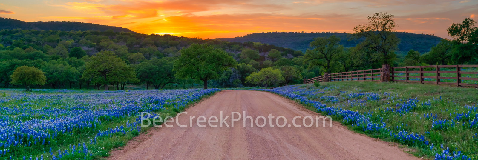 texas, texas bluebonnets, bluebonets, texas hill country, sunset, dirt road, scenery, texas landscape, hill country, texas wildflowers, lupine, hill country landscape, spring, bluebonnet road, wildflo, photo