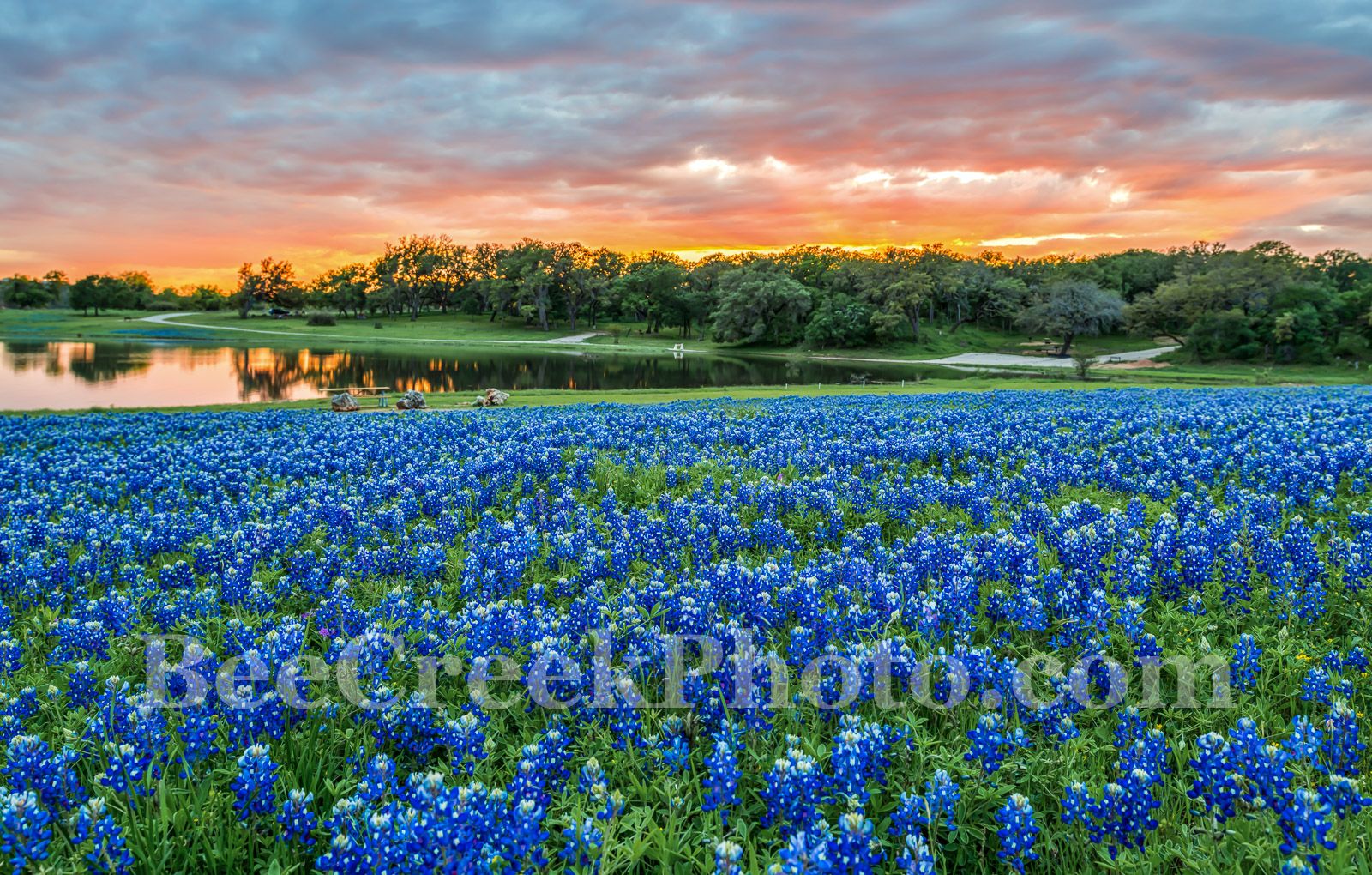 Bluebonnets, bluebonnet, sunset, sunsets, colors, oranges, pinks, reds, sky, colorful, blue bonnets, wildflowers, wildflower, Colorado River, landscapes, landscape, water, Texas flowers, Texas, flora,, photo