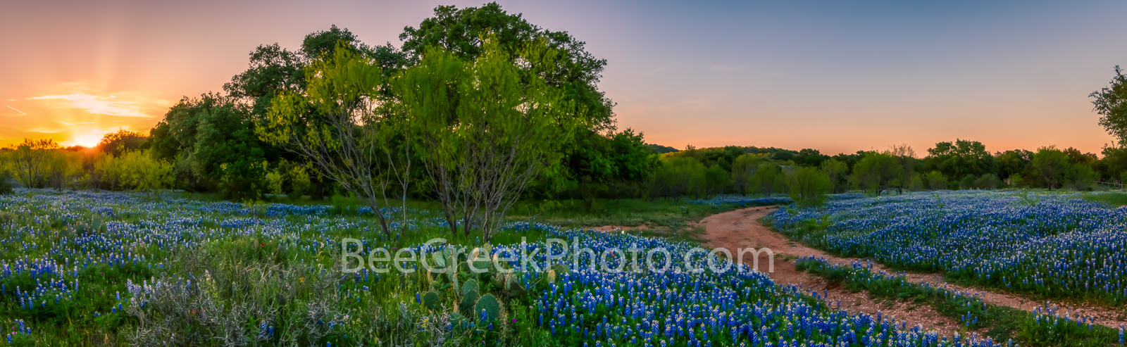 bluebonnets, indian paintbrush, wildflowers, texas hill country, texas, blue bonnets,hill country, shadows, light, road, mesquite, golden glow, green, blue, llano, sun, shadows, light, trees, curved r, photo