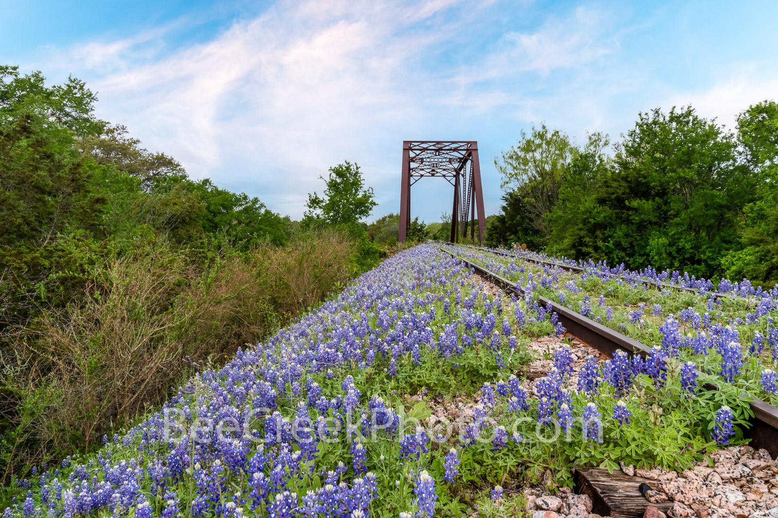 bluebonnets, texas bluebonnets, bluebonnet, track,railroad, railroad track, texas hill country, hill country, texas wildflowers, tressel, blue sky, texas wildflowers, wildflowers, texas lupine, blue s, photo