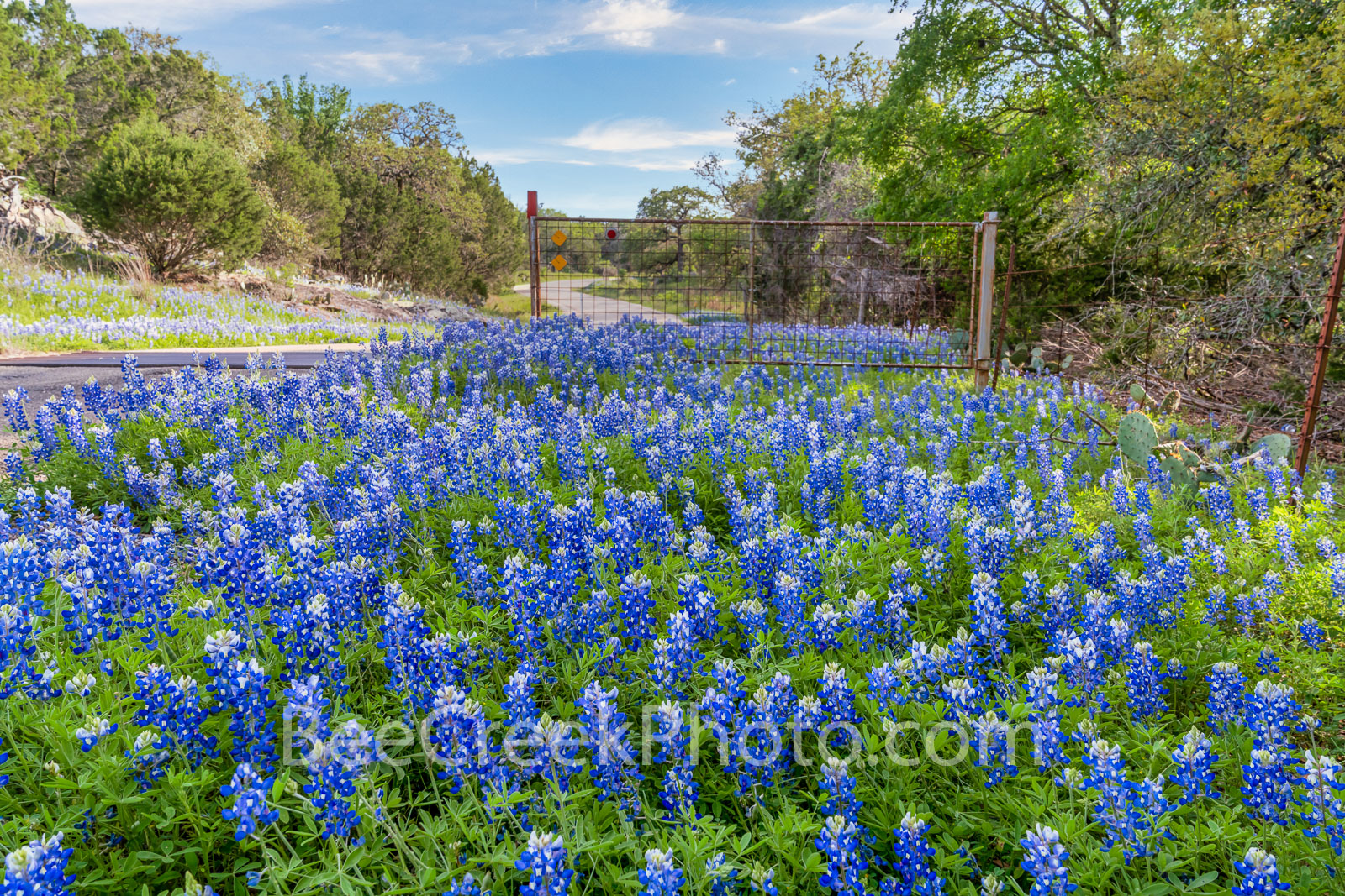 texas bluebonnets, bluebonnets, bluebonnet, texas hill country, hill country, county road, dirt road, texas wildflowers, wildflowers, gate, cattle guard, roadside, images of texas, images of bluebonne