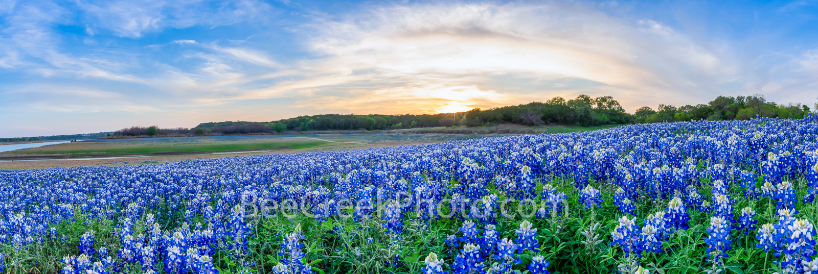 texas, bluebonnets, lake bluebonnets, texas wildflower, texas bluebonnet, images of bluebonnets, texas bluebonnets, images of texas, tx hill country, texas, sunset, field of bluebonnet, texas hill country, blue bonnet, blue bonnets, texas bluebonnet, art, flowers, field of wildflowers, , wildflowers, texas, river, flowers, hill country, landscape, lupine, texas lupines, nature, bluebonnets, landscape, bluebonnets texas, bluebonnet images, muleshoe park, lake travis, river, lake,