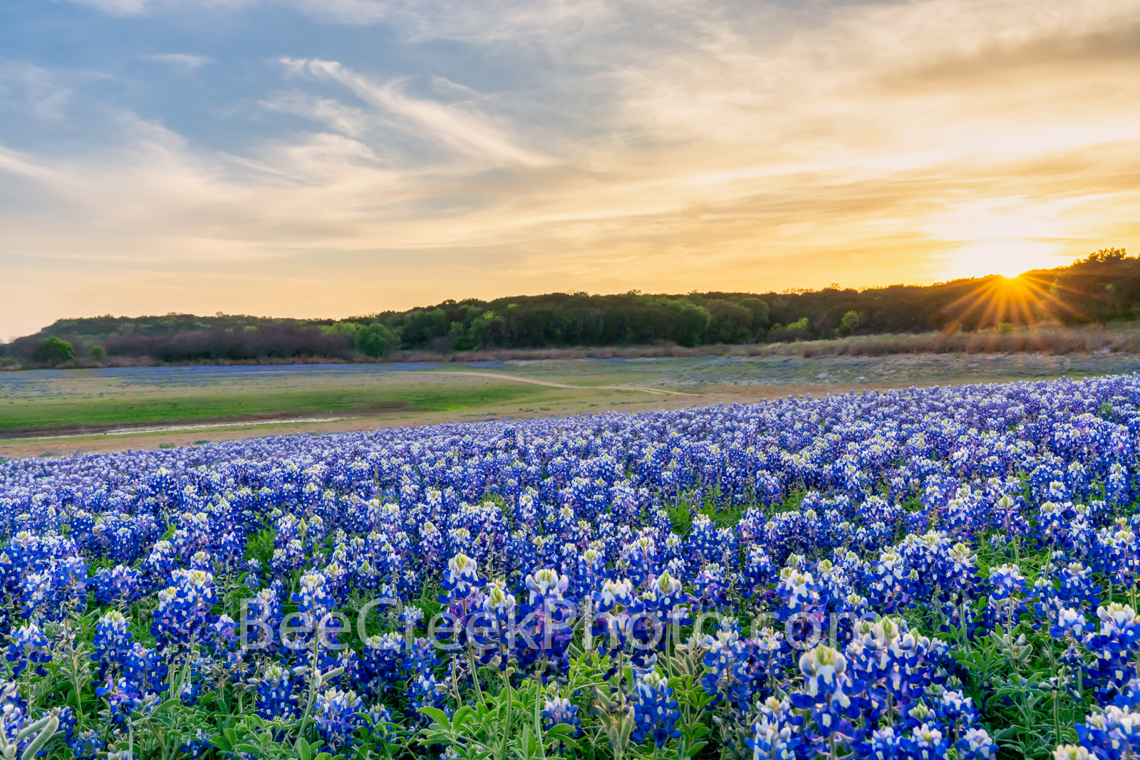 Bluebonnets at the Park Sunset - The Texas hill country dry river bed came back to life again after the waters went down along...