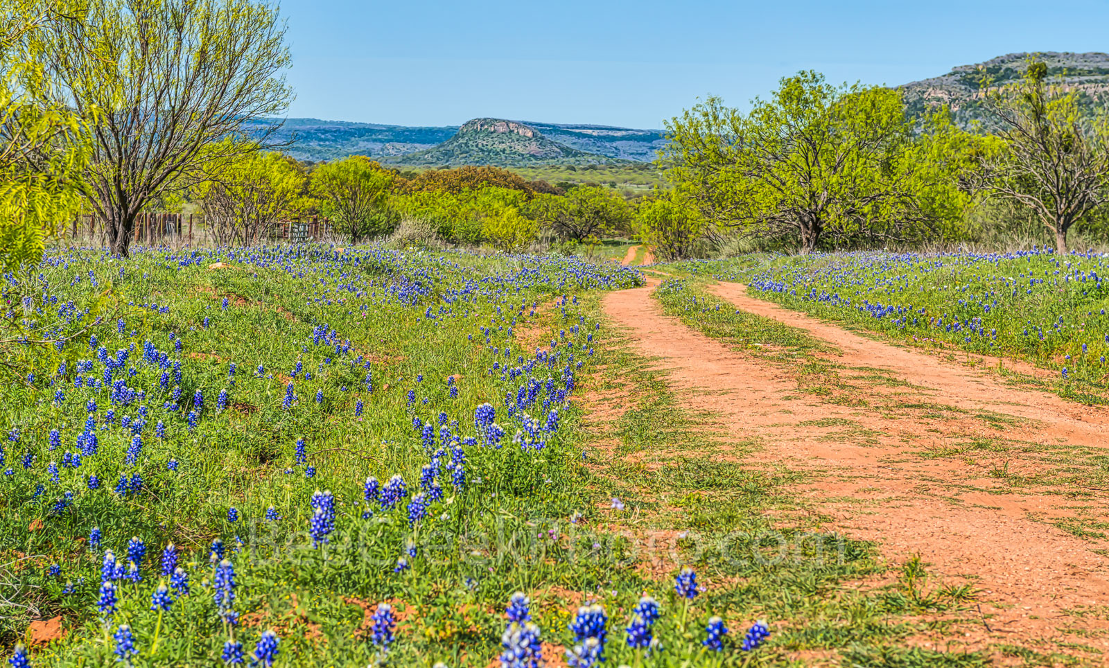 Bluebonnets, Willow City Loop, Texas hill country, dirt road, wildflowers, hills, , photo