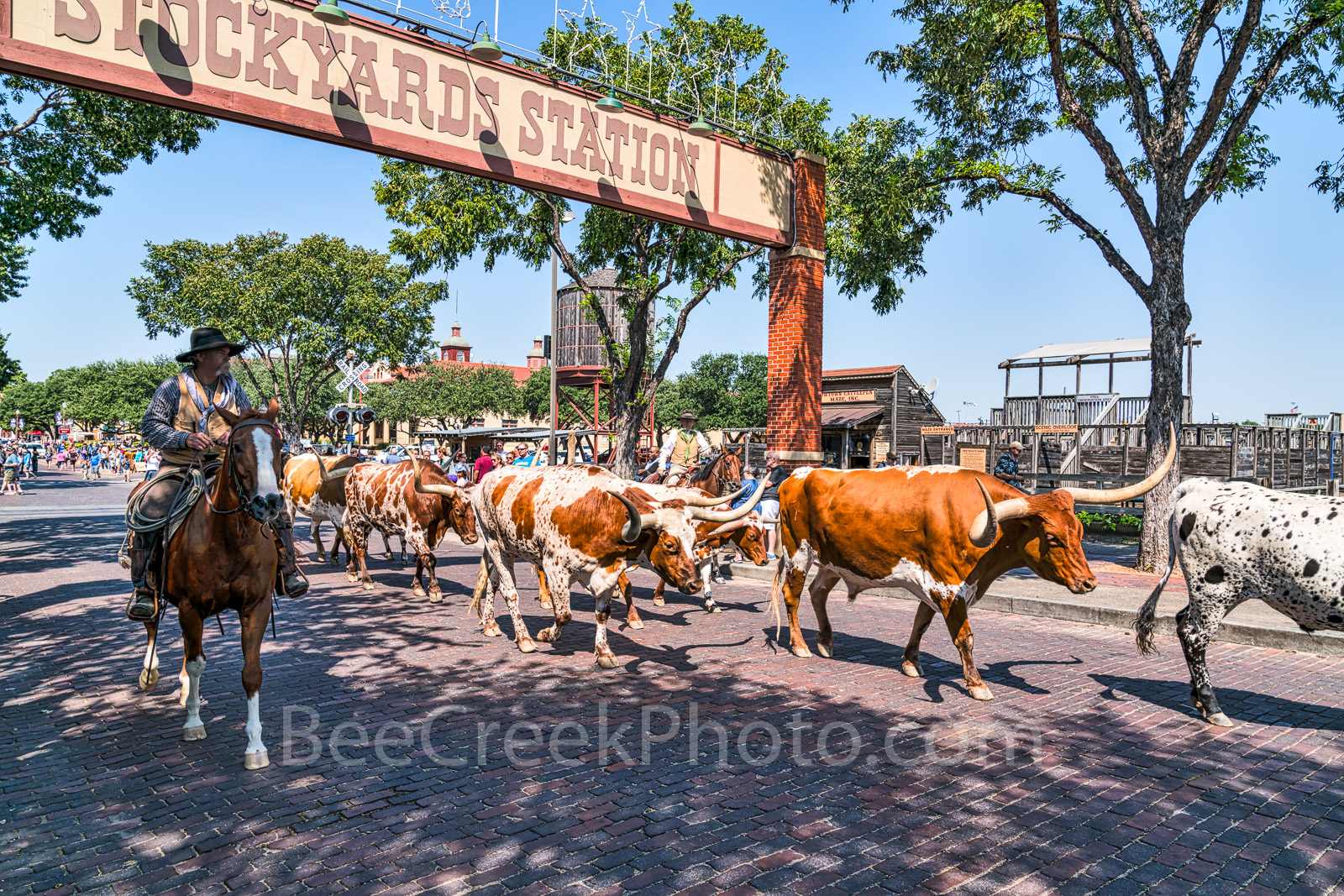 Fort Worth, Stockyards, Cattle Drive at StockYards, horses, longhorns, cowtown, historic, western, stables, Leddy boots, Maverick Fine Western Wear, historic district, Hyatt, carriage rides, toursit, , photo