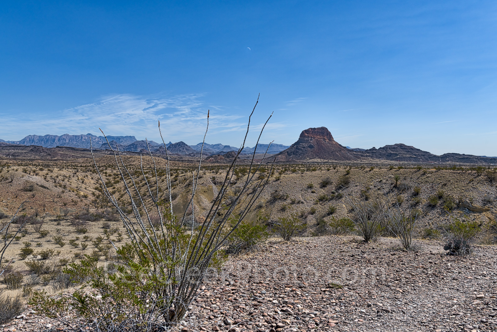 Octillos, Big Bend National Park, Cerro Castellian, Chisos mountains, distant views, desert, landscape,, photo