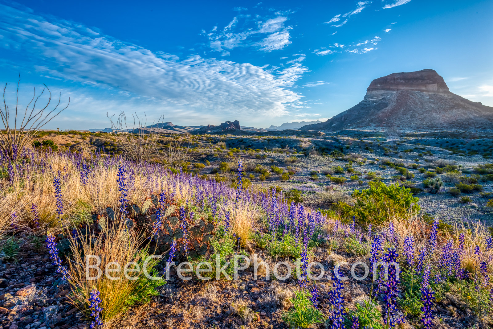 Chiso Bluebonnets - The early morning sun kisses the bluebonnets on the side of this sloping hill side in Big Bend with the distant...