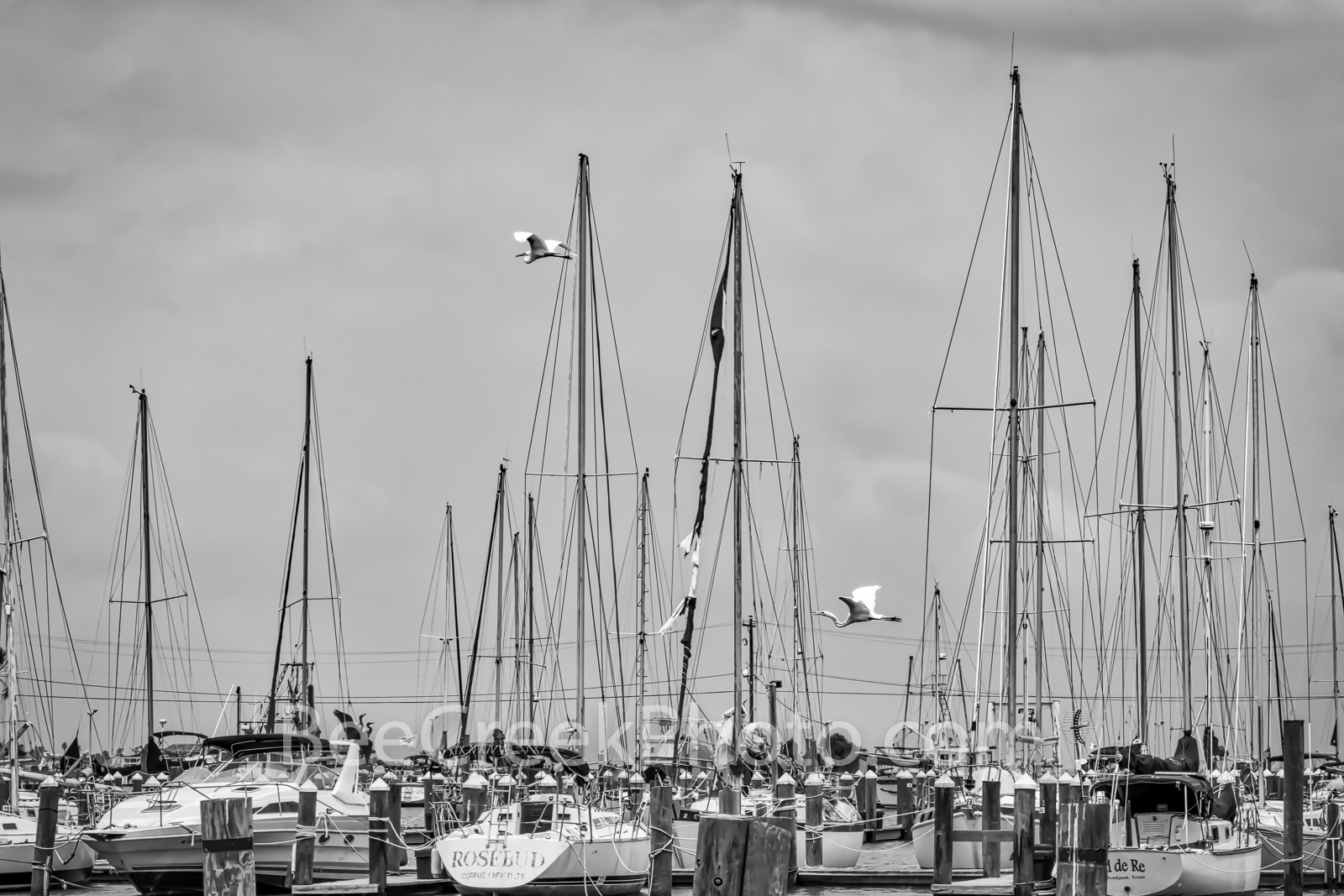 Coastal Sailboat Marina BW - Coastal sailboat marina as two great egrets were flying over in black and white. We like all the...