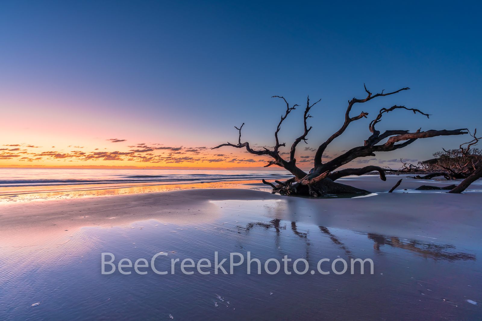 Colorful Sunrise at Driftwood Beach - Jekyll Island driftwood beach with trees in the sand at sunrise. It was a beautiful morning...