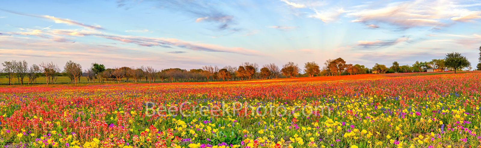 Colorful Wildflowers Panorama - Another panorama of Texas wildflowers as they seem to climb this hill side with all these wonderful...
