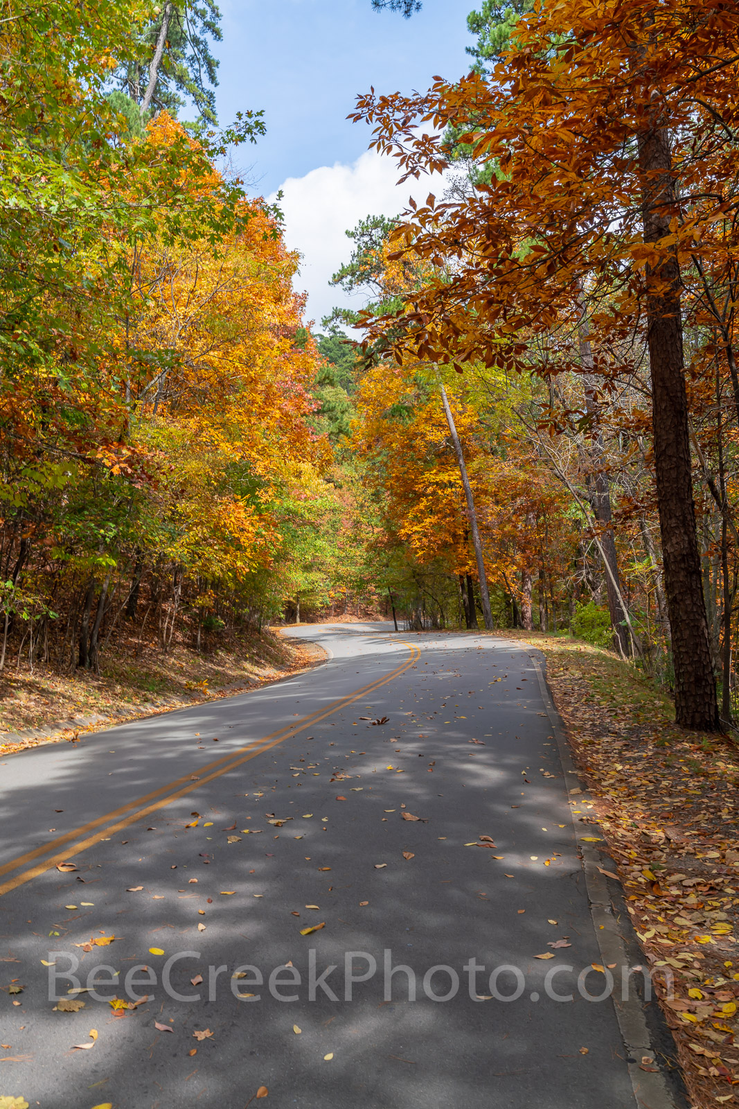 fall, autumn, yellow, orange, pine, cypress, trees, shades, yellow, orange, rust, colors, Tower Mountain, road, arkansas, national, forest, october, curves, sun light, tree line road, pines, maples, s, photo