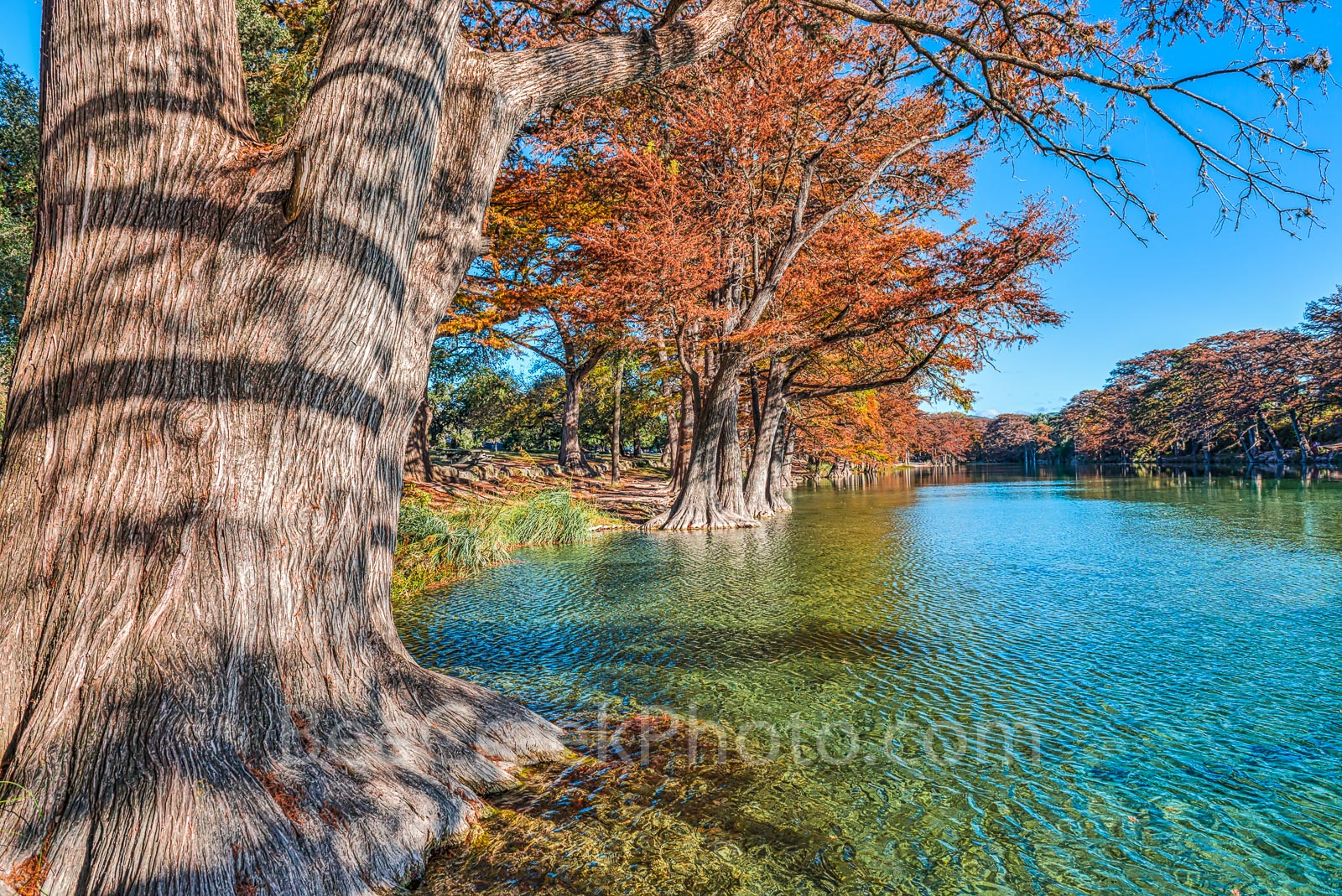 America, American, Frio River, Garner State Park, blue green waters, blue water, colorful, cypress trees, emerald, fall, fall colors, fall cypress trees, fall trees, images of Texas, landscape, landsc, photo