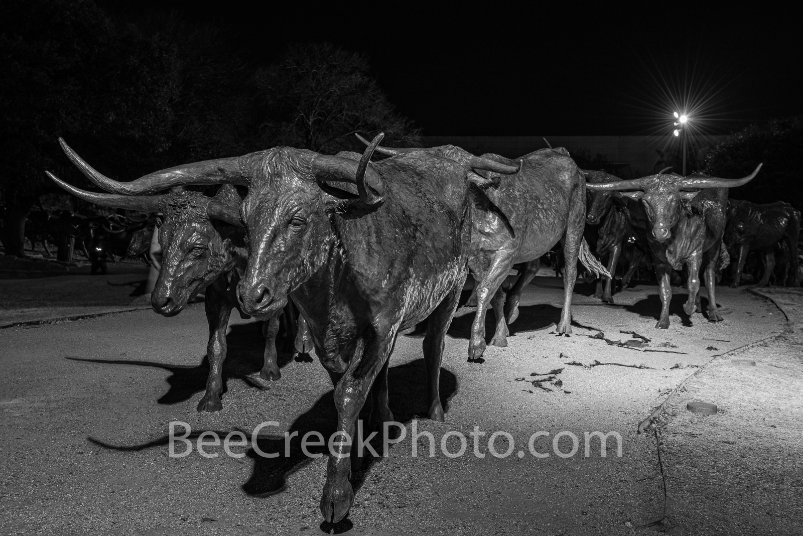 Pioneer plaza, downtown dallas, city of dallas, longhorns, bronze, statues, Dallas Bronze Longhorns,  dallas convention center, Shawnee trail, art, downtown, dallas parks, texas, black and white,, photo