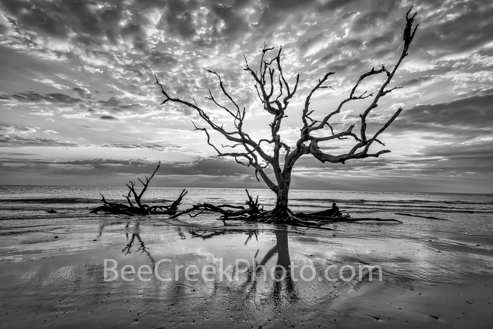 Driftwood Beach Reflections B W - Sunrise on Driftwood beach at Jekyll island was a spectacular site on the early morning at...