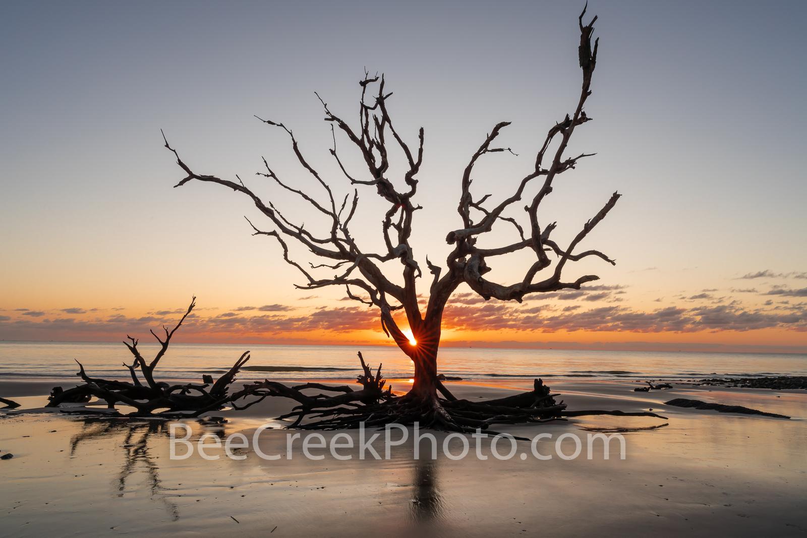 driftwood beach, tree, jekyll island, georgia, boneyard beach, stumps, coast, alantic, ocean, coastline, beach, sunrise, rays, Golden Isles,, photo
