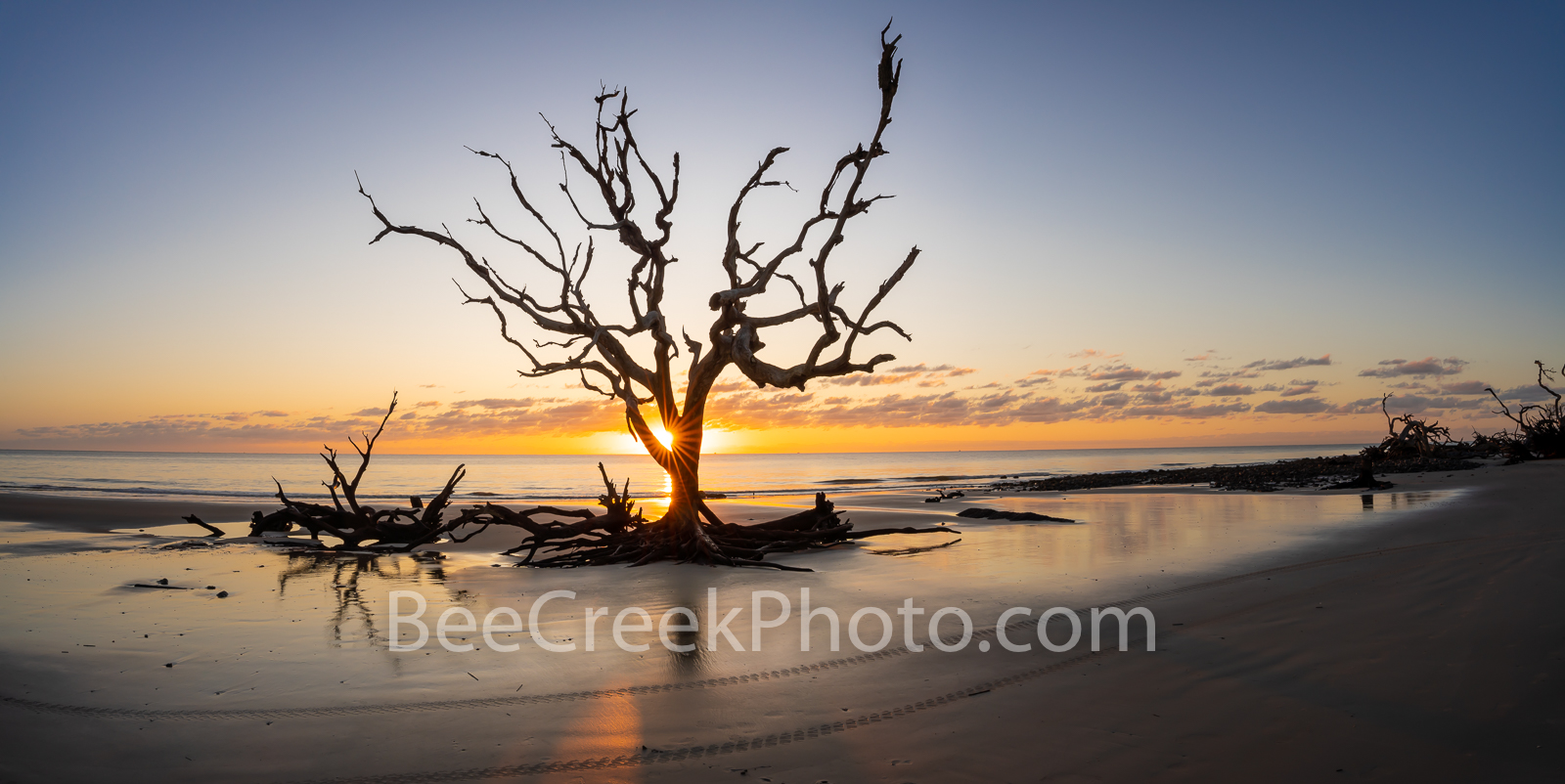 driftwood beach, tree, jekyll island, georgia, boneyard beach, stumps,  coast, alantic, ocean, coastline, beach, sunrise, driftwood, rays, Golden Isles, barrier islands, pano, panorama, , photo