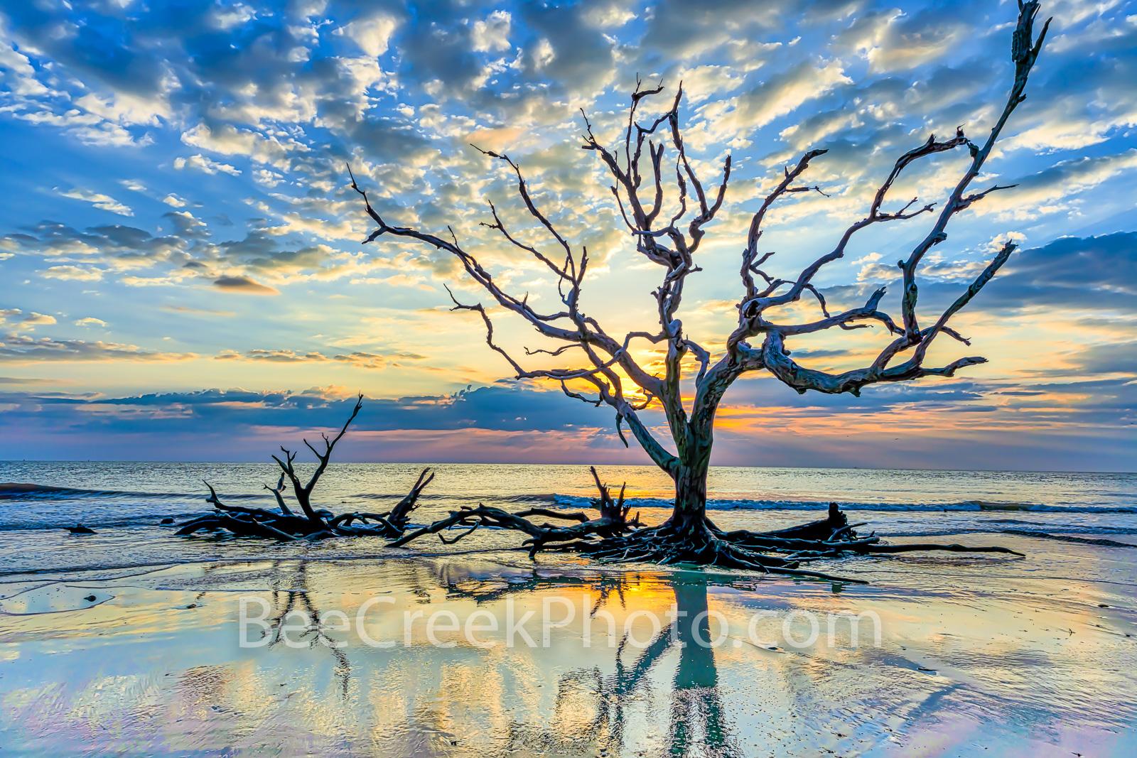 driftwood beach, morning, sunrise, reflections, sunrise, jekyll island, golden isles, barrier island, alantic coast, Georgia, east coast, landscape, beach,, photo