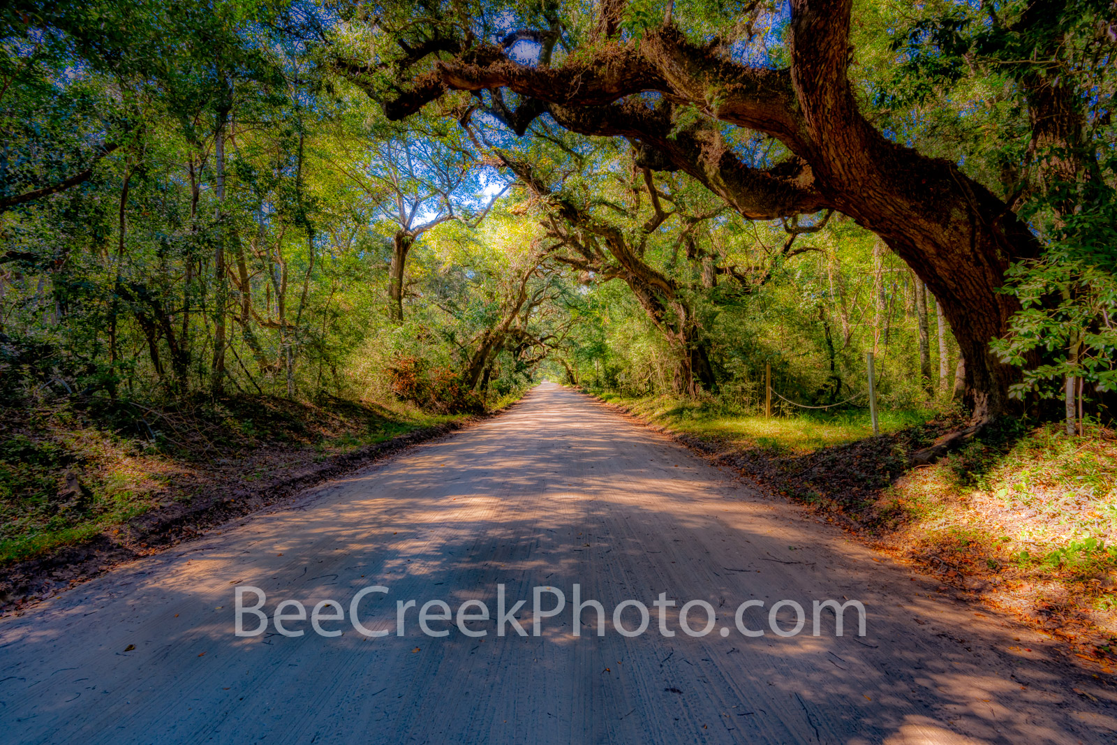 edisto island, charleston, sc, south carolina, dirt road, road, sun rays, light, shadows, trees, tree, southern us, deep south, moody, live oak, sun filtering, green, branch, magical, forest,