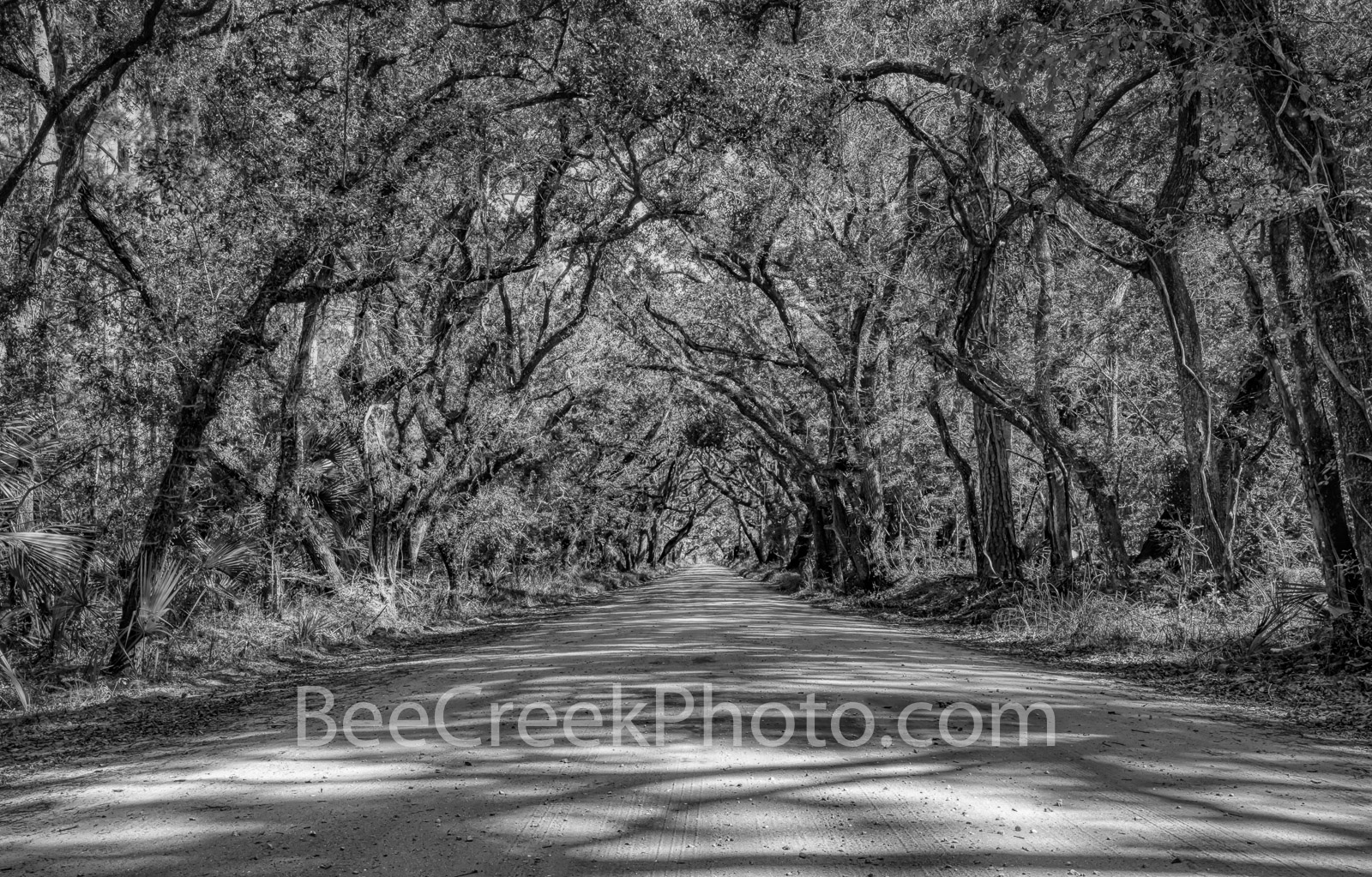 Edisto Island Tree Tunnel Charleston SC BW -  Charleston SC Dirt Road tree forest on Botany Bay in black and white. These trees...