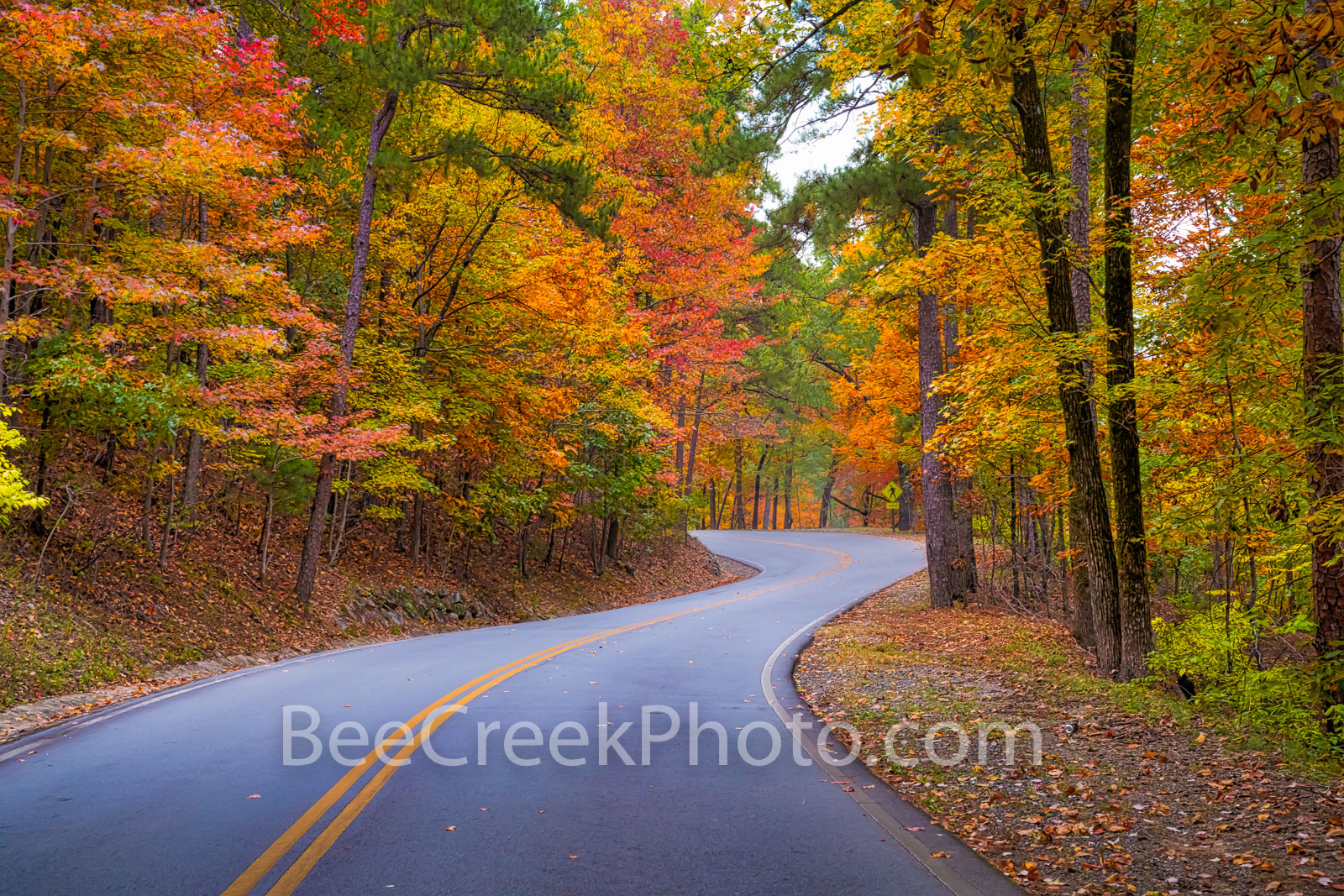 fall, autumn, landscape, yellow, orange, pine, cypress, trees, shades, yellow, orange, rust, colors, tower mountain, road, arkansas, national, forest, october, curves, sun light, tree line road, pines, photo