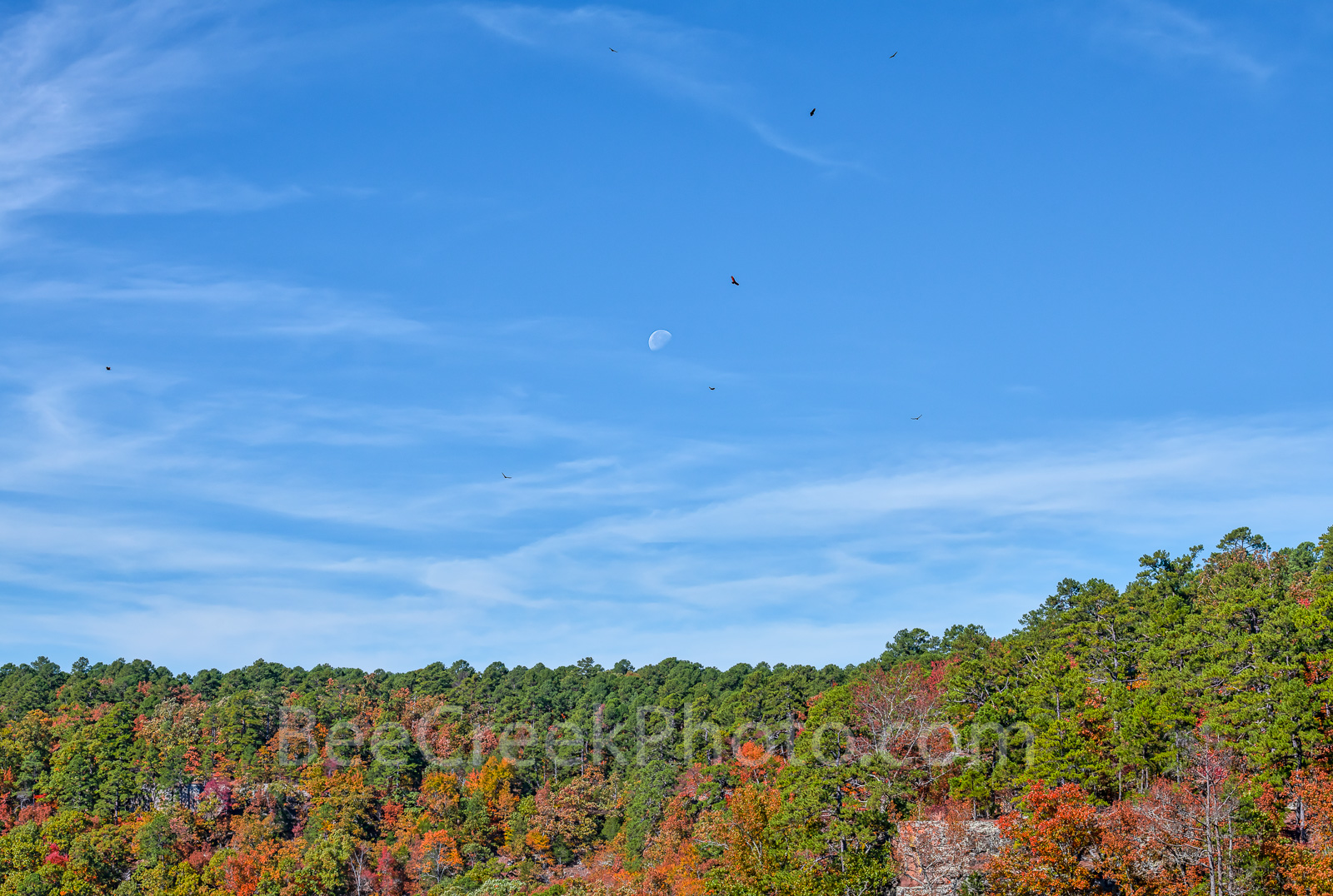 Fall, moon, colors, trees, buzzards, blue, sky, autumn, scene, Petit Jean State Park, mountain, Quachita Mountains, Ozark, orange, red, green,, photo