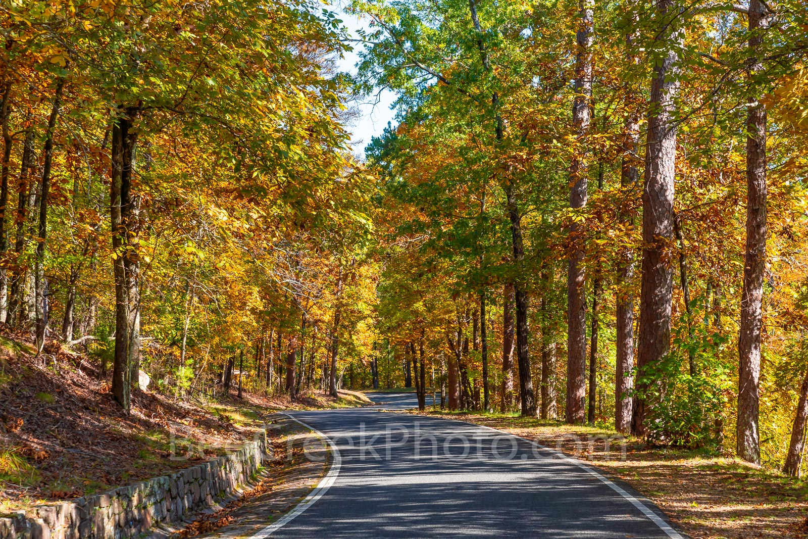 fall, autumn, yellow, orange, pine, cypress, trees, shades, yellow, orange, rust, colors, Tower Mountain, road, arkansas, national, forest, october, curves, sun light, tree line road, pines, maples, f, photo