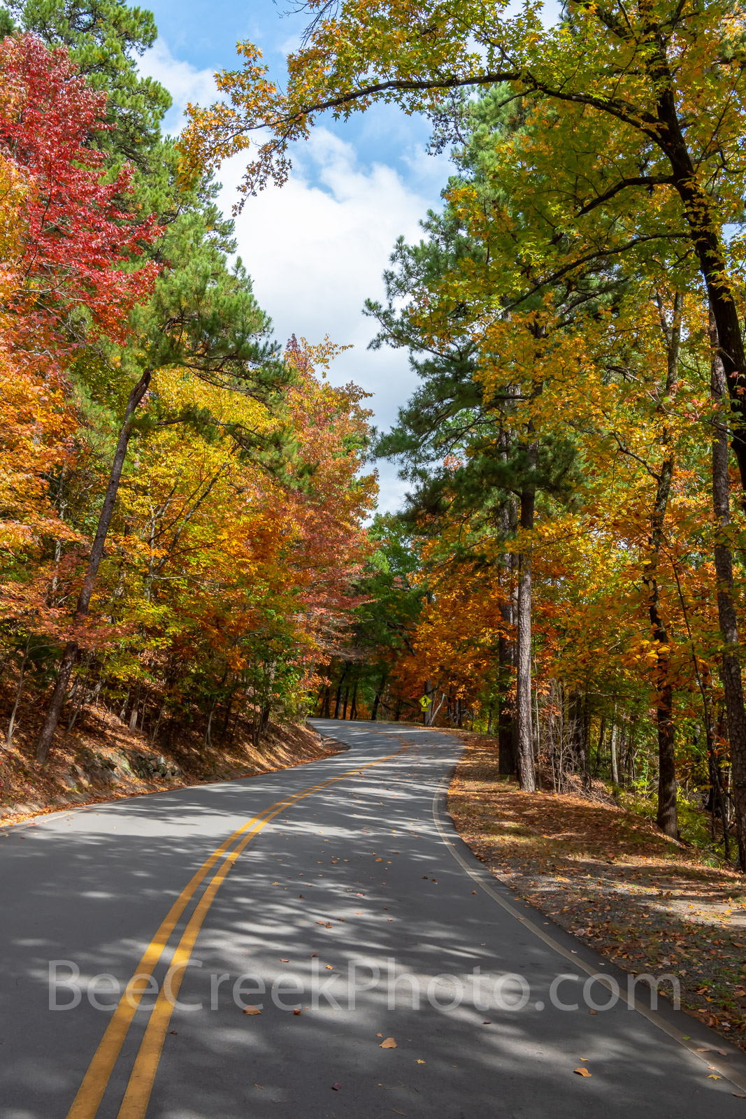 fall, autumn, yellow, orange, pine, cypress, trees, shades, yellow, orange, rust, colors, fall color, Tower Mountain, road, arkansas, national, forest, october, curves, sun light, tree line road, pin, photo