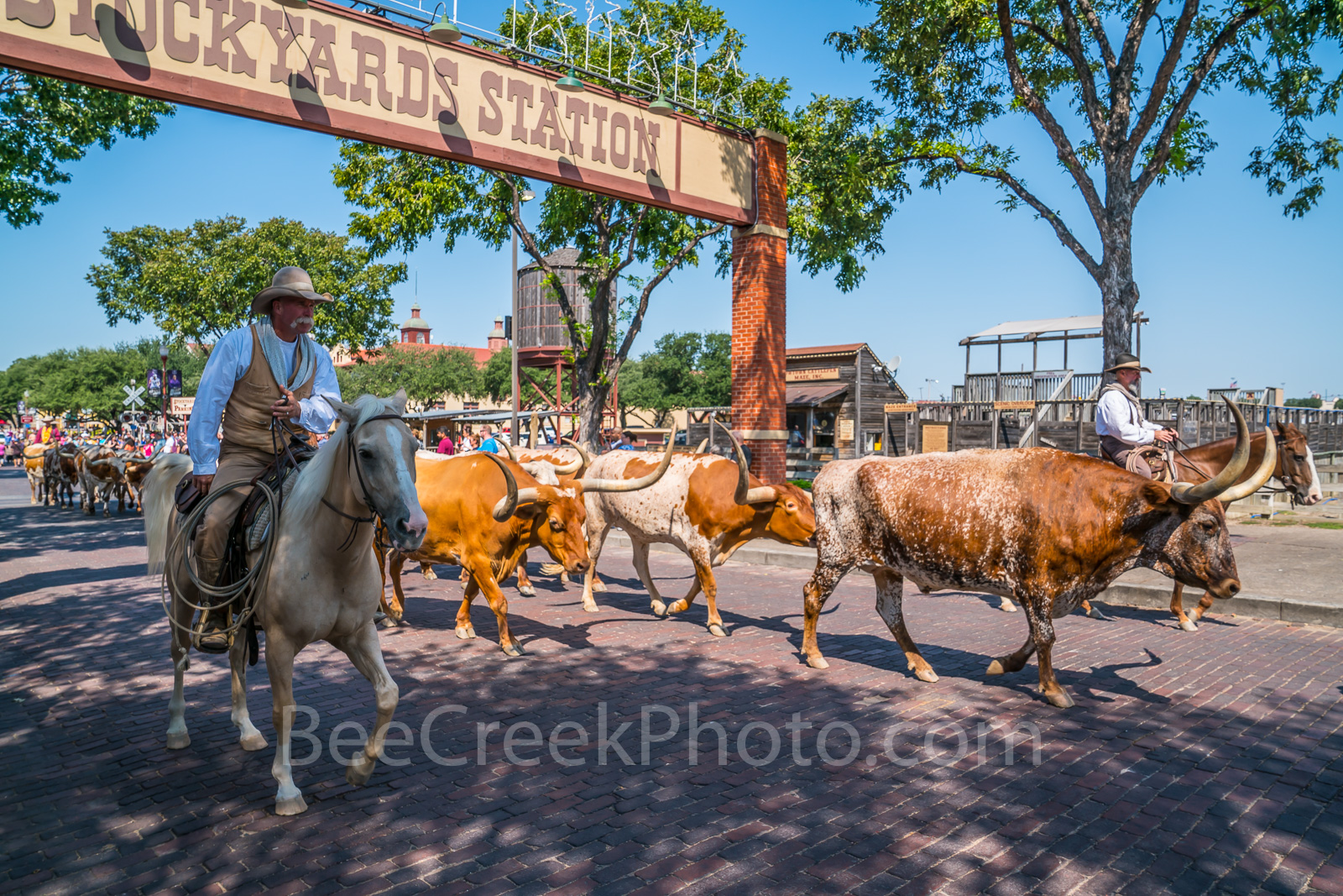 Fort Worth Cattle Drive Texas Landscape Amp Skyline Images