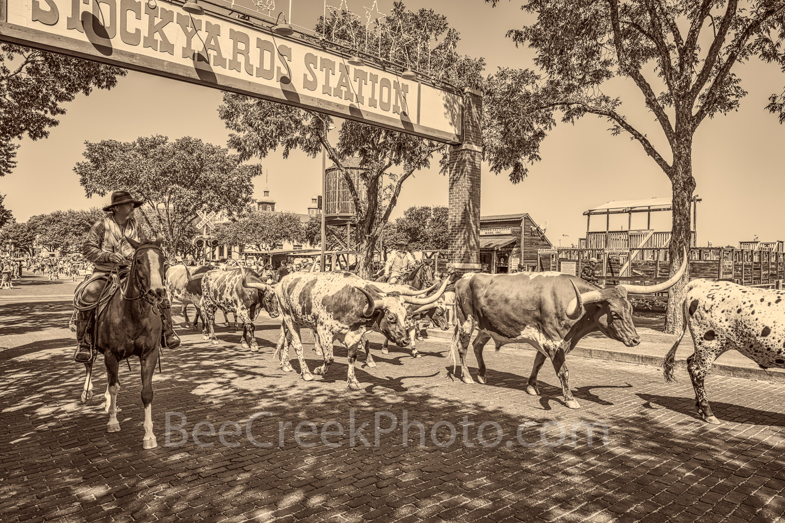 Fort Worth, Stockyards, cowboy, horses, longhorns, cowtown, historic, western, stables, Leddy boots, Maverick Fine Western Wear, historic district, Hyatt, carriage rides, toursit, bars, saloons,